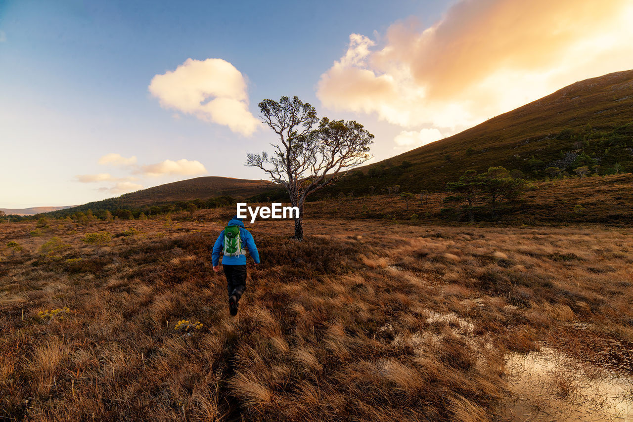 Rear View Of Hiker Walking On Grassy Field At Sunset