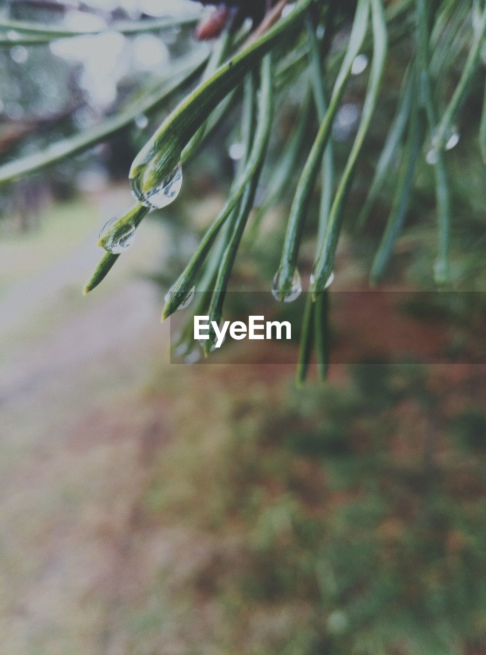 drop, nature, weather, water, cold temperature, beauty in nature, wet, outdoors, winter, day, plant, growth, fragility, raindrop, no people, freshness, grass, close-up