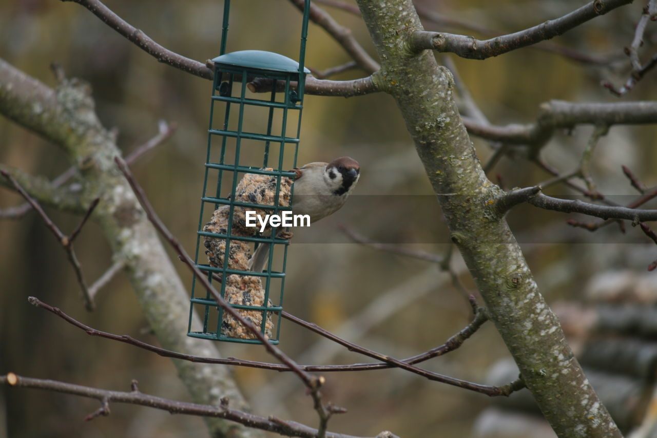 one animal, animals in the wild, animal themes, bird, animal wildlife, perching, focus on foreground, branch, no people, bird feeder, nature, day, tree, bluetit, outdoors, woodpecker, great tit, beauty in nature, close-up