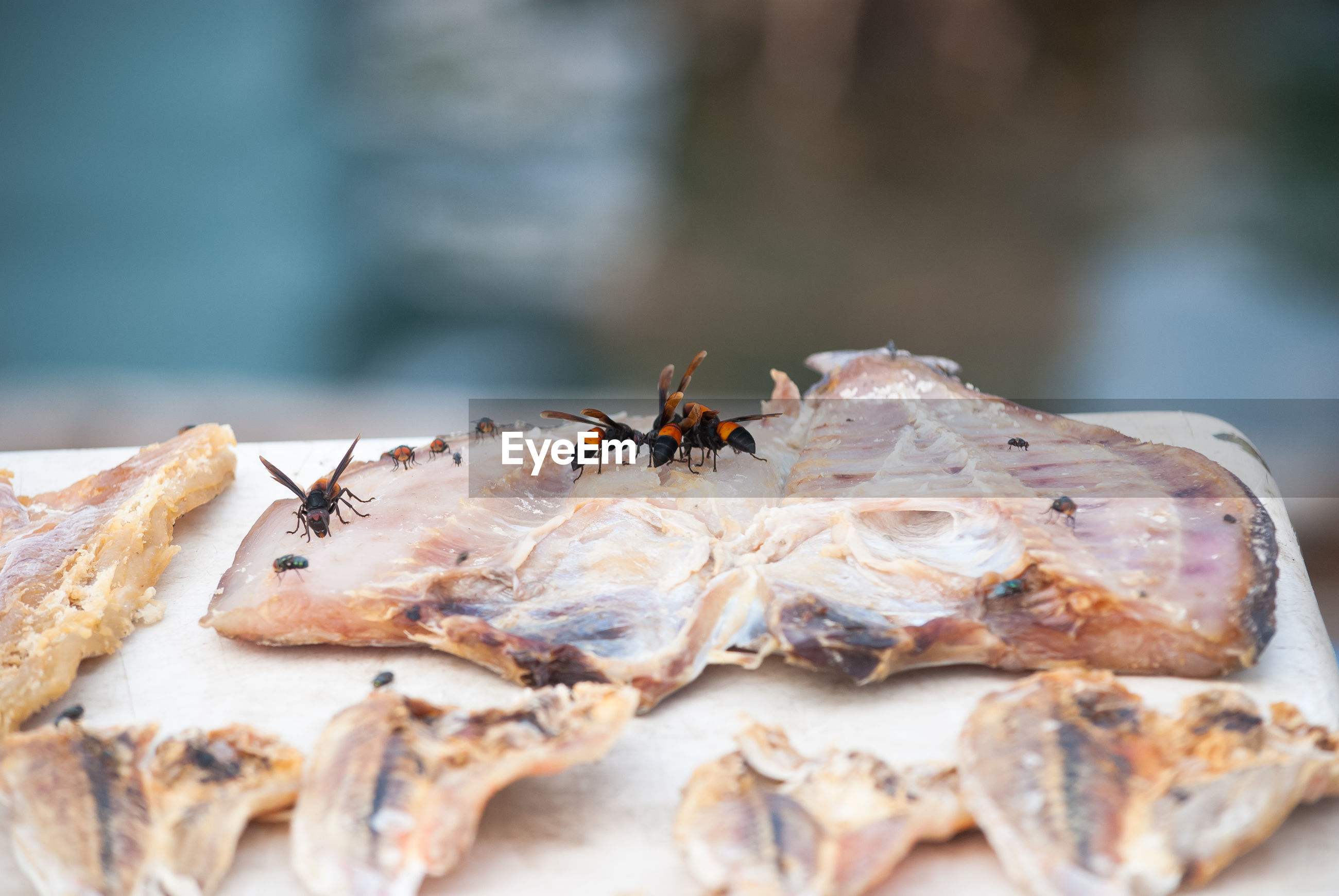 Close-up of insects on dried fish