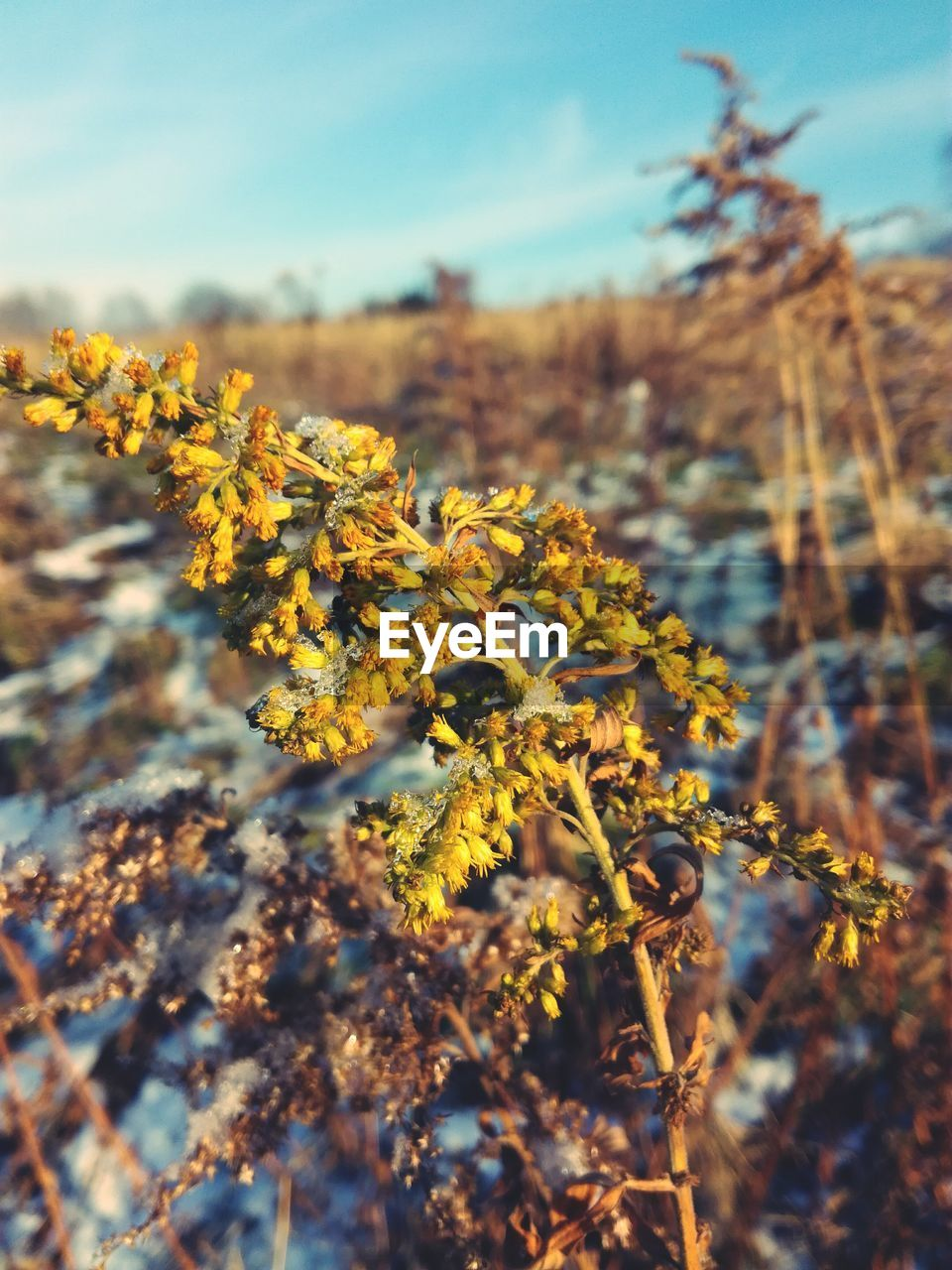 flower, nature, growth, fragility, yellow, beauty in nature, blossom, selective focus, plant, field, no people, tranquility, day, freshness, outdoors, petal, tree, springtime, close-up, sky, flower head