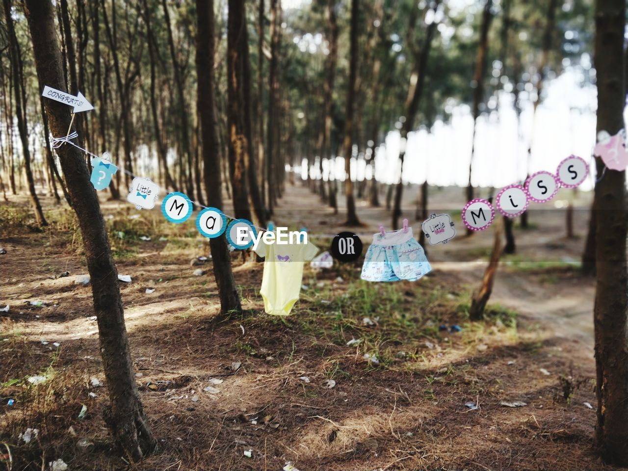 Clothes And Text Hanging On Clothesline Against Trees