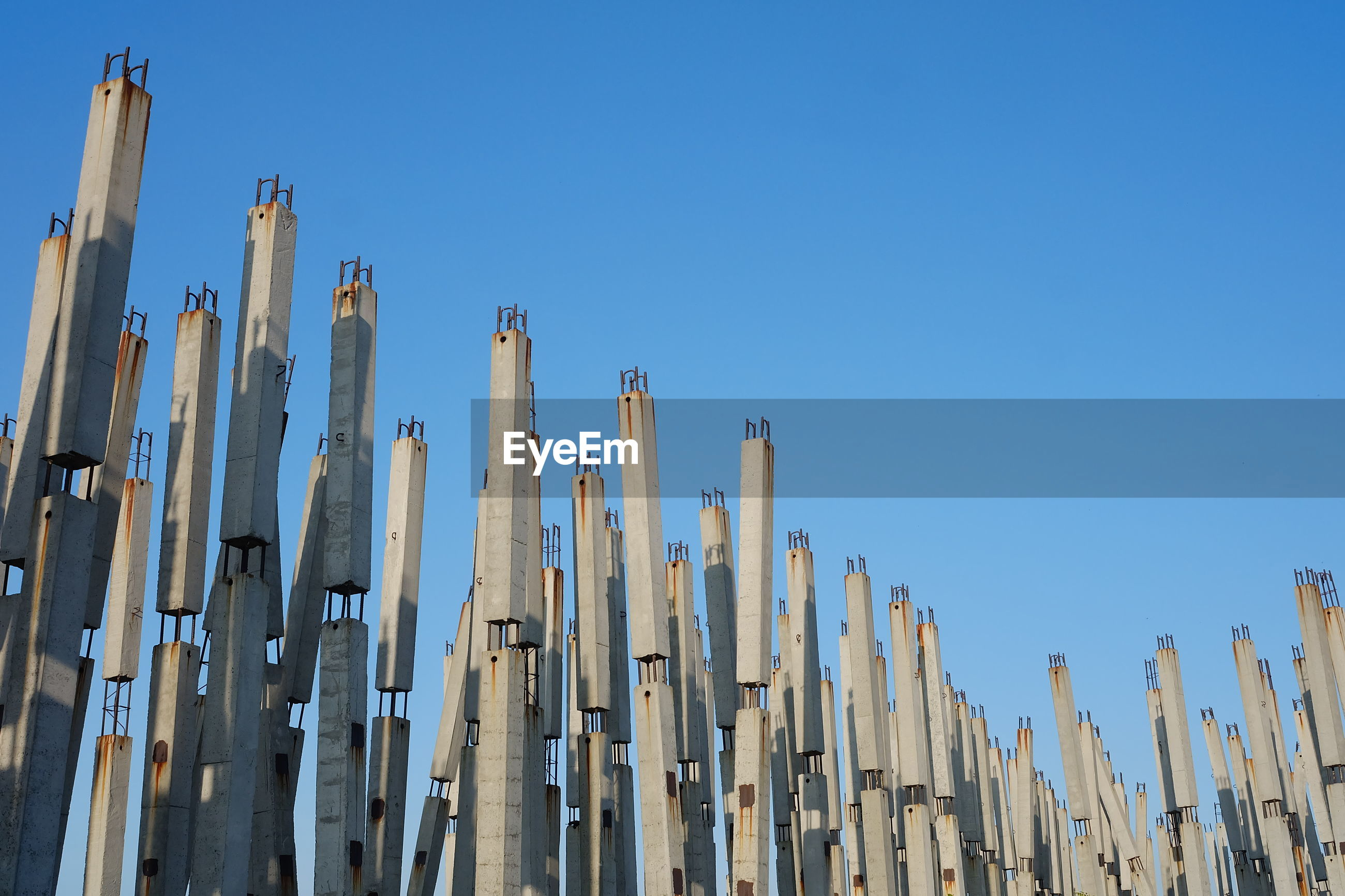 LOW ANGLE VIEW OF BAMBOO AGAINST BLUE SKY