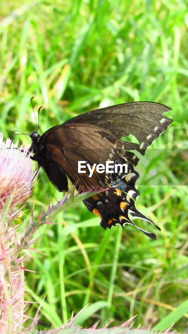 animal wildlife, animals in the wild, invertebrate, insect, animal themes, animal, one animal, plant, animal wing, flower, beauty in nature, close-up, butterfly - insect, flowering plant, day, focus on foreground, nature, no people, growth, green color, pollination, butterfly, flower head