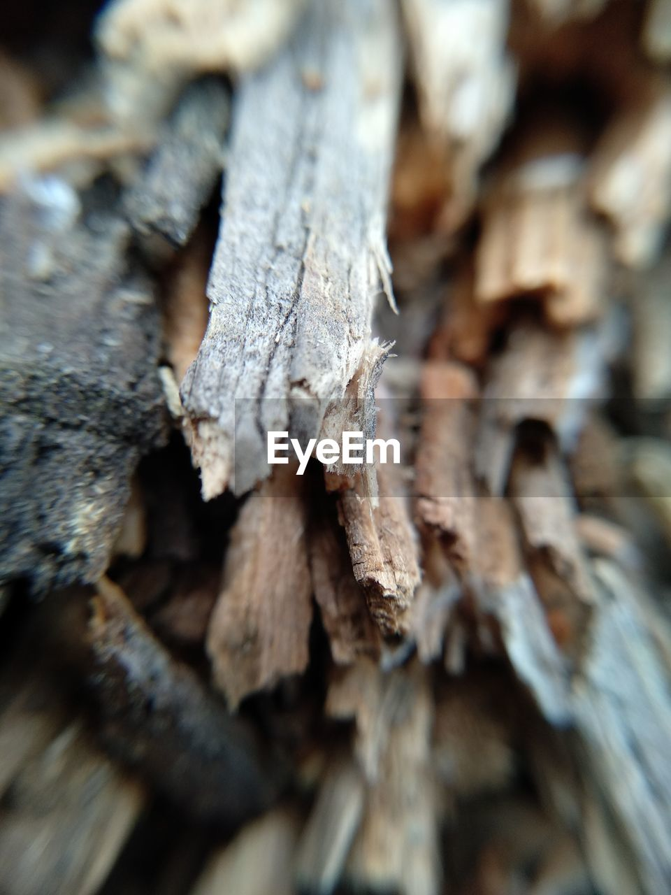 close-up, tree, wood - material, selective focus, no people, textured, log, pattern, full frame, wood, backgrounds, nature, timber, rough, day, plant, tree trunk, trunk, brown, outdoors, bark