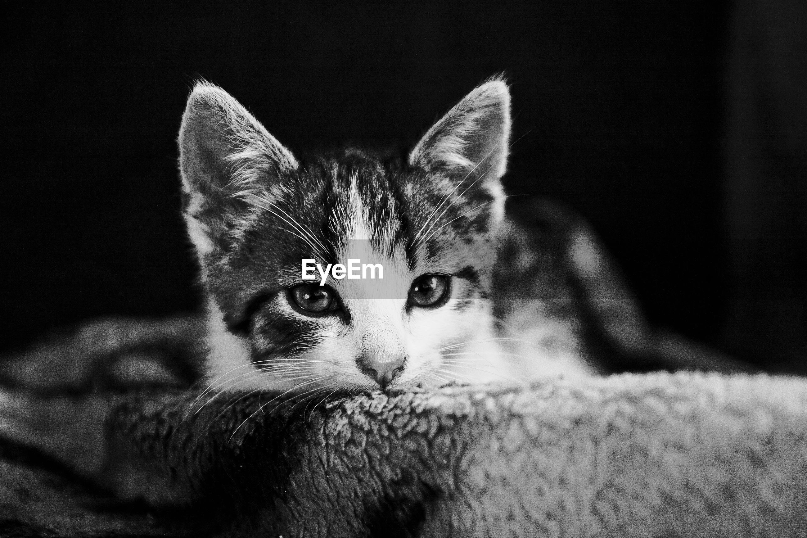 Close-up portrait of kitten on bed against black background