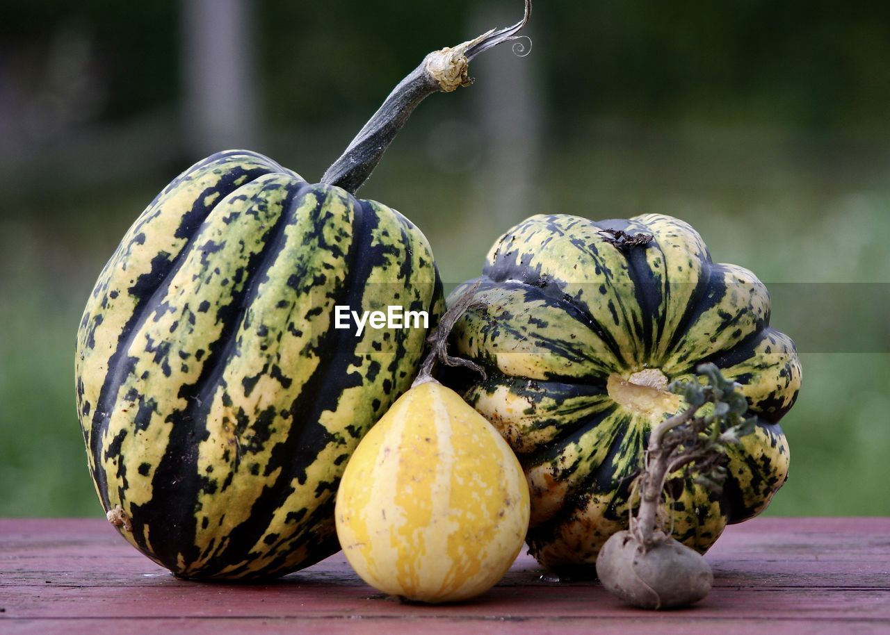 food and drink, fruit, food, pumpkin, healthy eating, table, close-up, focus on foreground, freshness, no people, day, vegetable, rotten, outdoors, gourd, nature, squash - vegetable