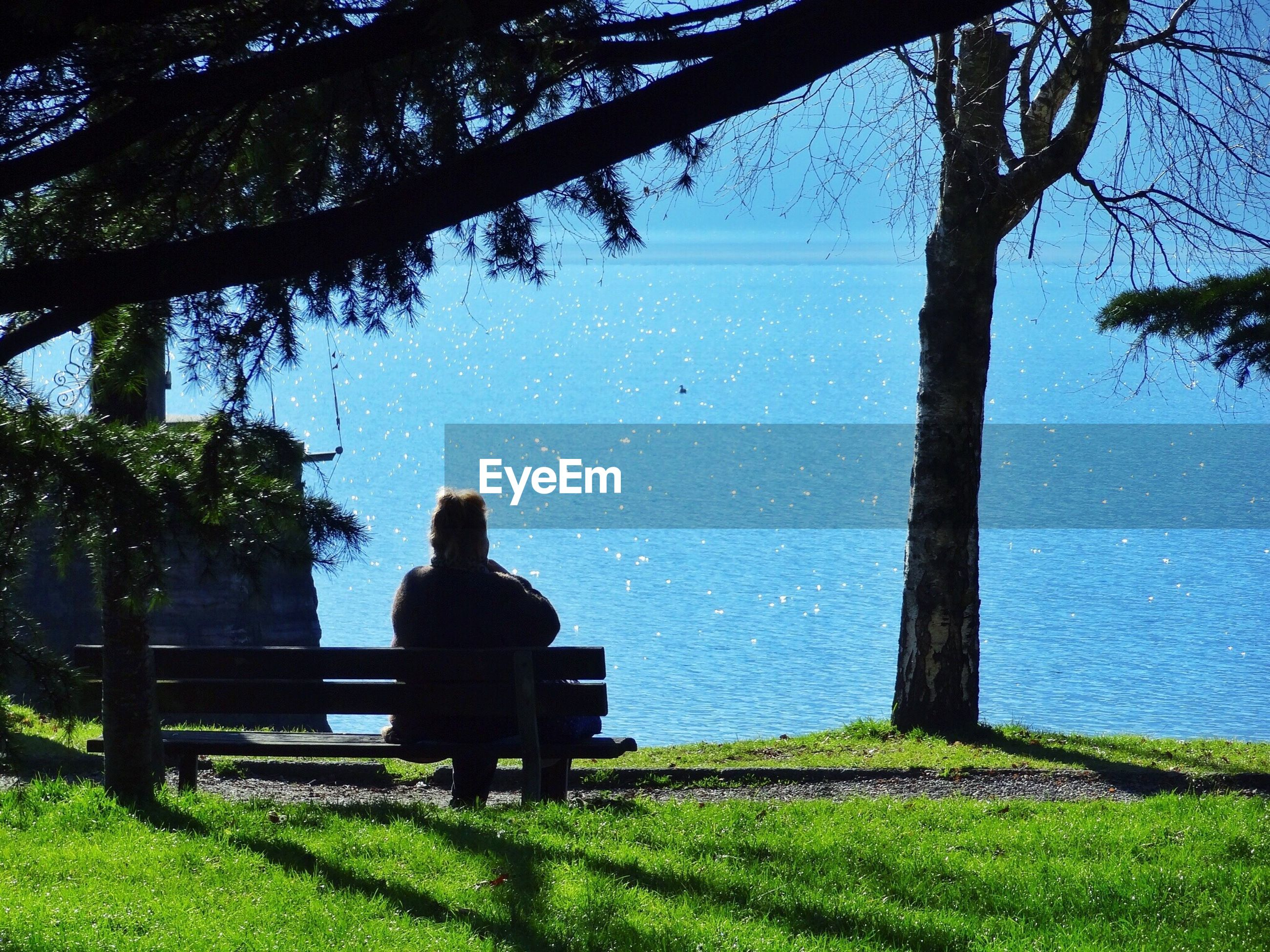 Rear view of woman sitting on bench by tree trunk looking at lake