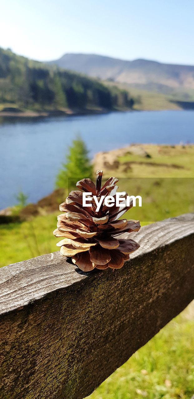 focus on foreground, water, nature, plant, wood - material, close-up, beauty in nature, day, lake, tranquility, no people, sky, mountain, tree, tranquil scene, sunlight, growth, flowering plant, flower, outdoors, bark