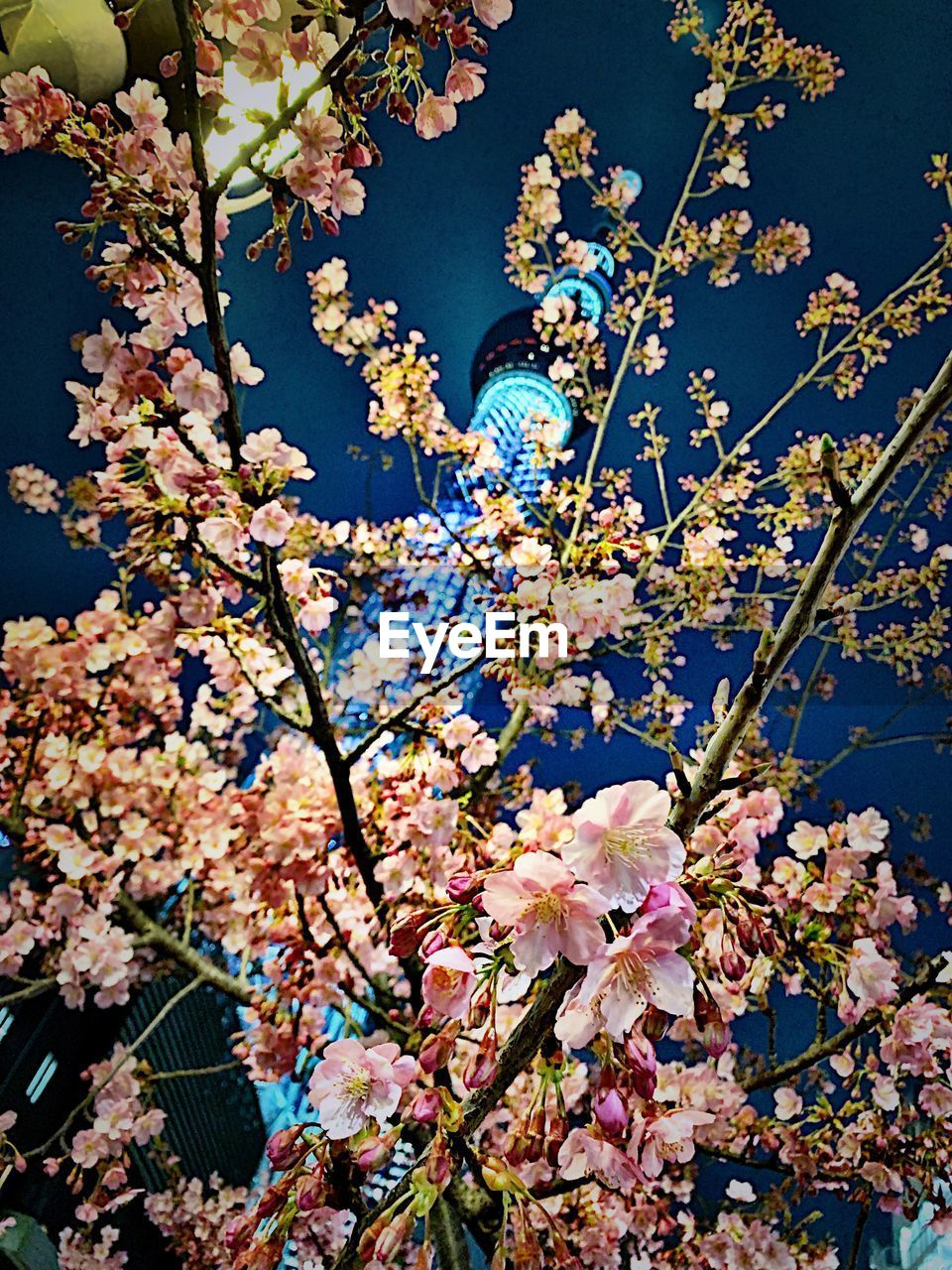 plant, flowering plant, flower, growth, beauty in nature, freshness, fragility, vulnerability, tree, blossom, branch, springtime, nature, low angle view, no people, pink color, day, cherry blossom, built structure, petal, outdoors, cherry tree, flower head