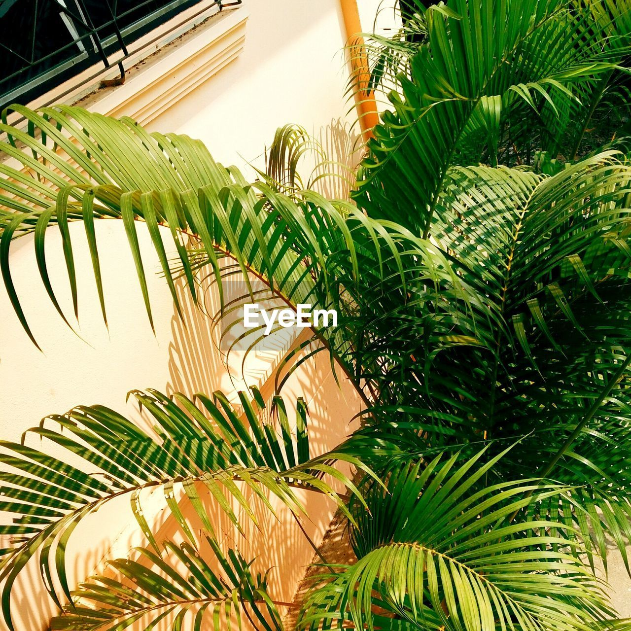 leaf, palm tree, growth, green color, plant, day, no people, sunlight, frond, outdoors, nature, close-up, freshness