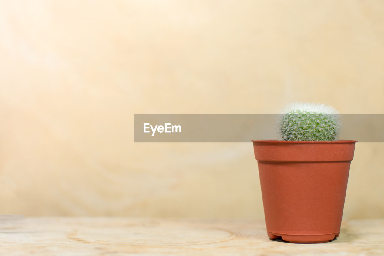 Potted Cactus On Wooden Table Against Beige Wall