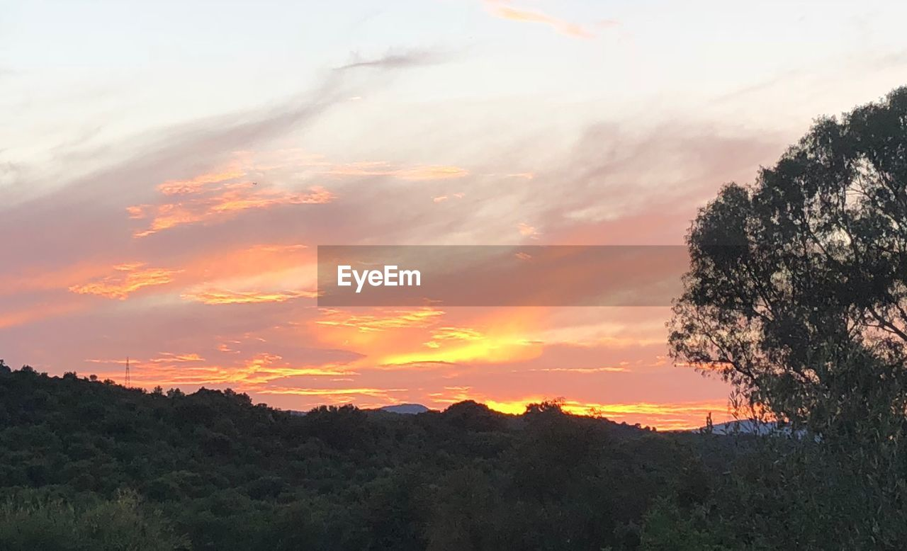 sunset, sky, beauty in nature, scenics - nature, plant, tree, cloud - sky, tranquil scene, tranquility, orange color, nature, silhouette, mountain, idyllic, no people, non-urban scene, growth, environment, outdoors, landscape