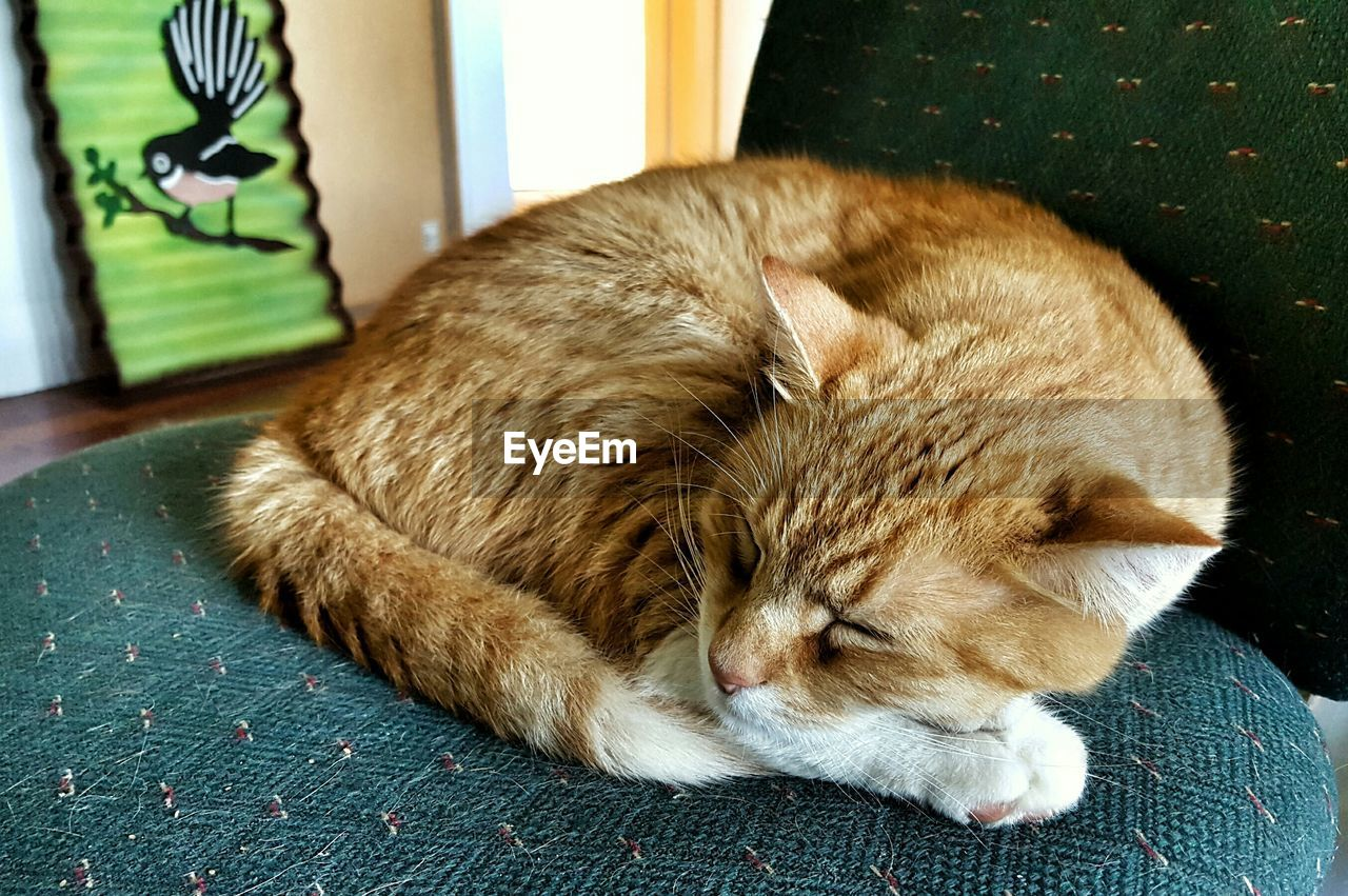 Close-up of domestic cat sleeping on chair