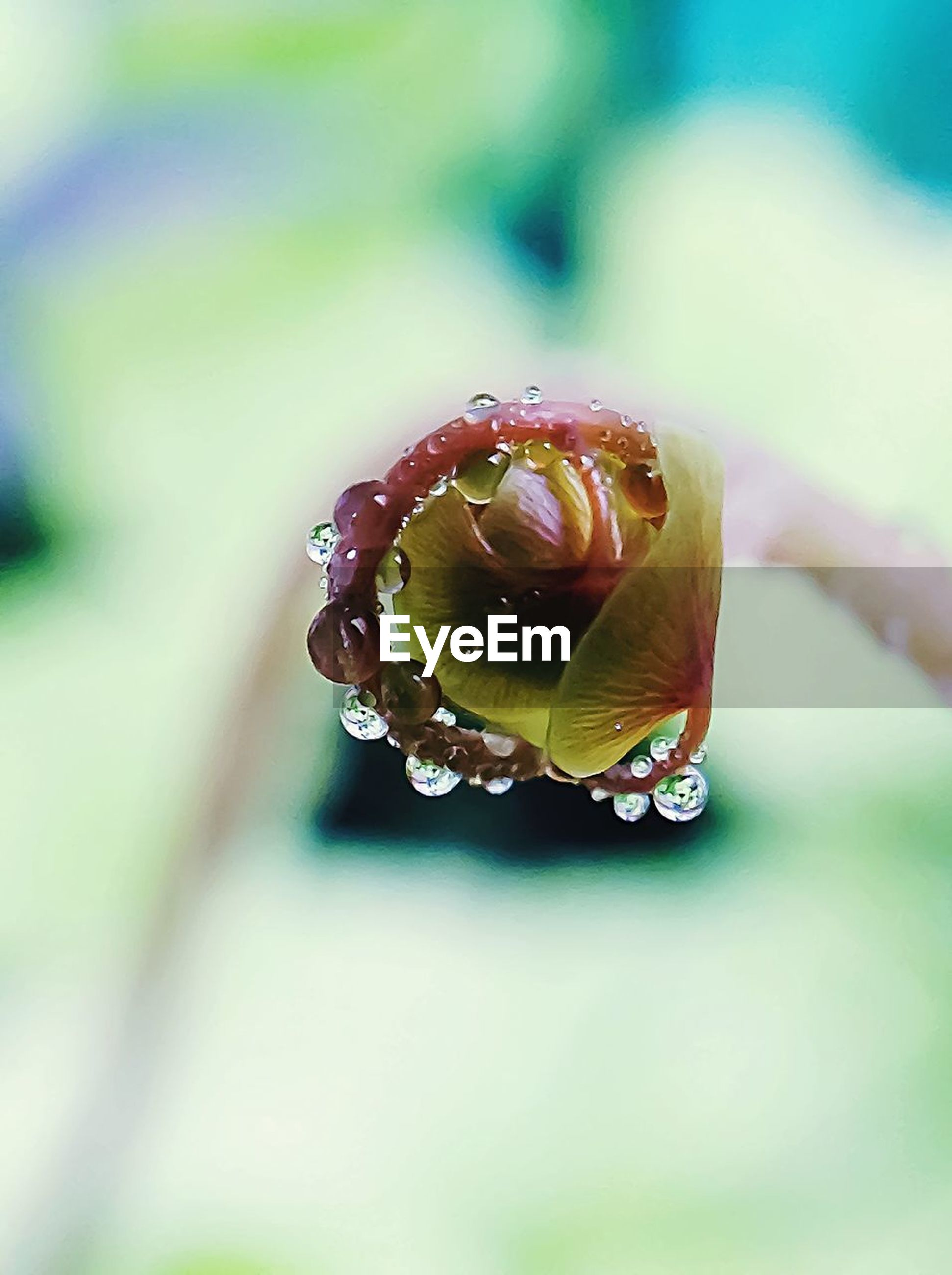 close-up, drop, water, plant, focus on foreground, no people, nature, beauty in nature, vulnerability, day, fragility, wet, invertebrate, animal, animal wildlife, selective focus, outdoors, animals in the wild, animal themes, dew, flower, raindrop