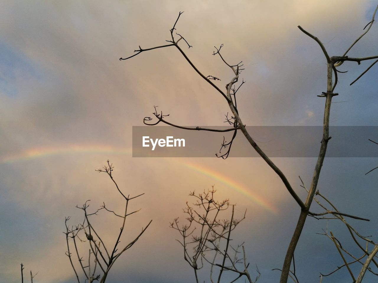 Low Angle View Of Bare Tree Against Rainbow In Cloudy Sky