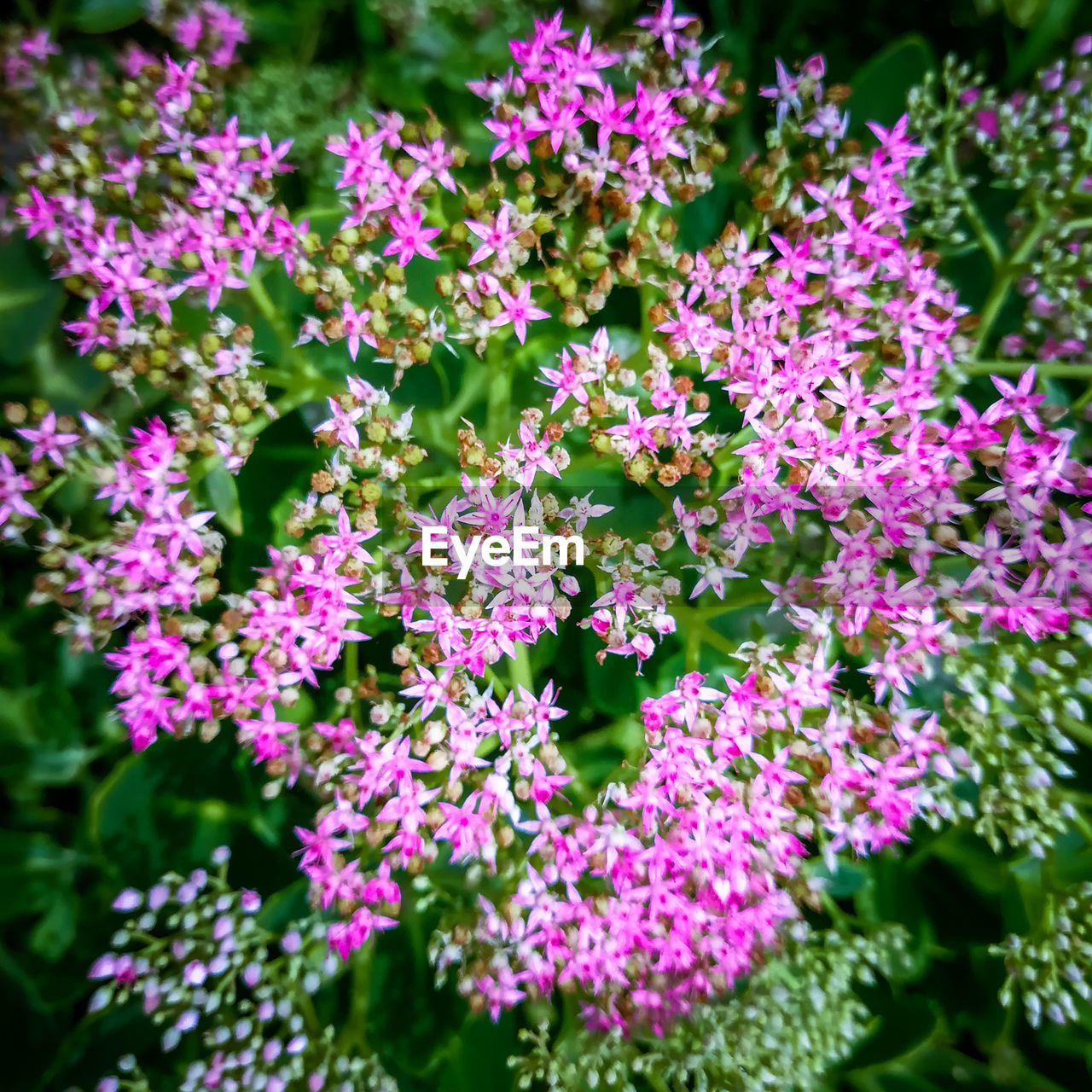 flower, beauty in nature, plant, nature, growth, fragility, no people, freshness, day, purple, petal, outdoors, pink color, blooming, lilac, flower head, close-up