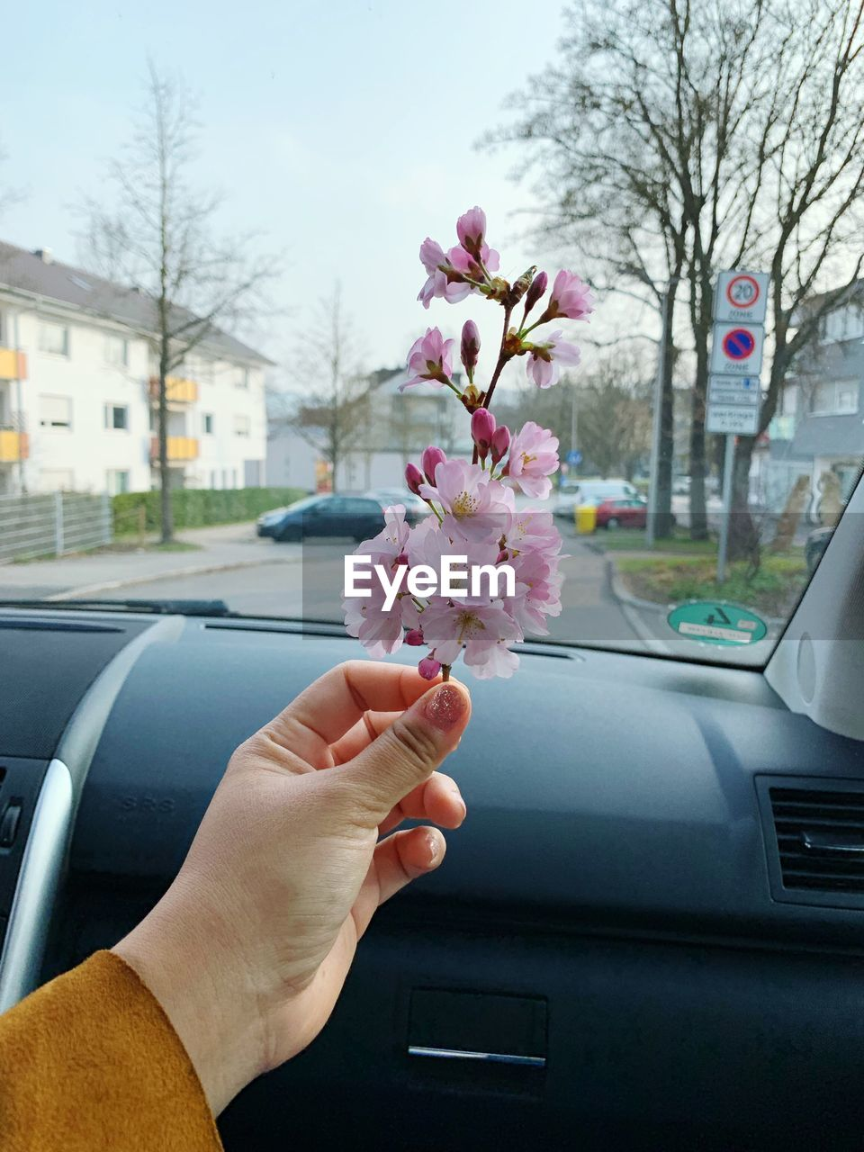 car, mode of transportation, motor vehicle, transportation, flower, flowering plant, plant, land vehicle, human hand, hand, one person, human body part, tree, pink color, fragility, real people, nature, holding, freshness, road, outdoors, finger