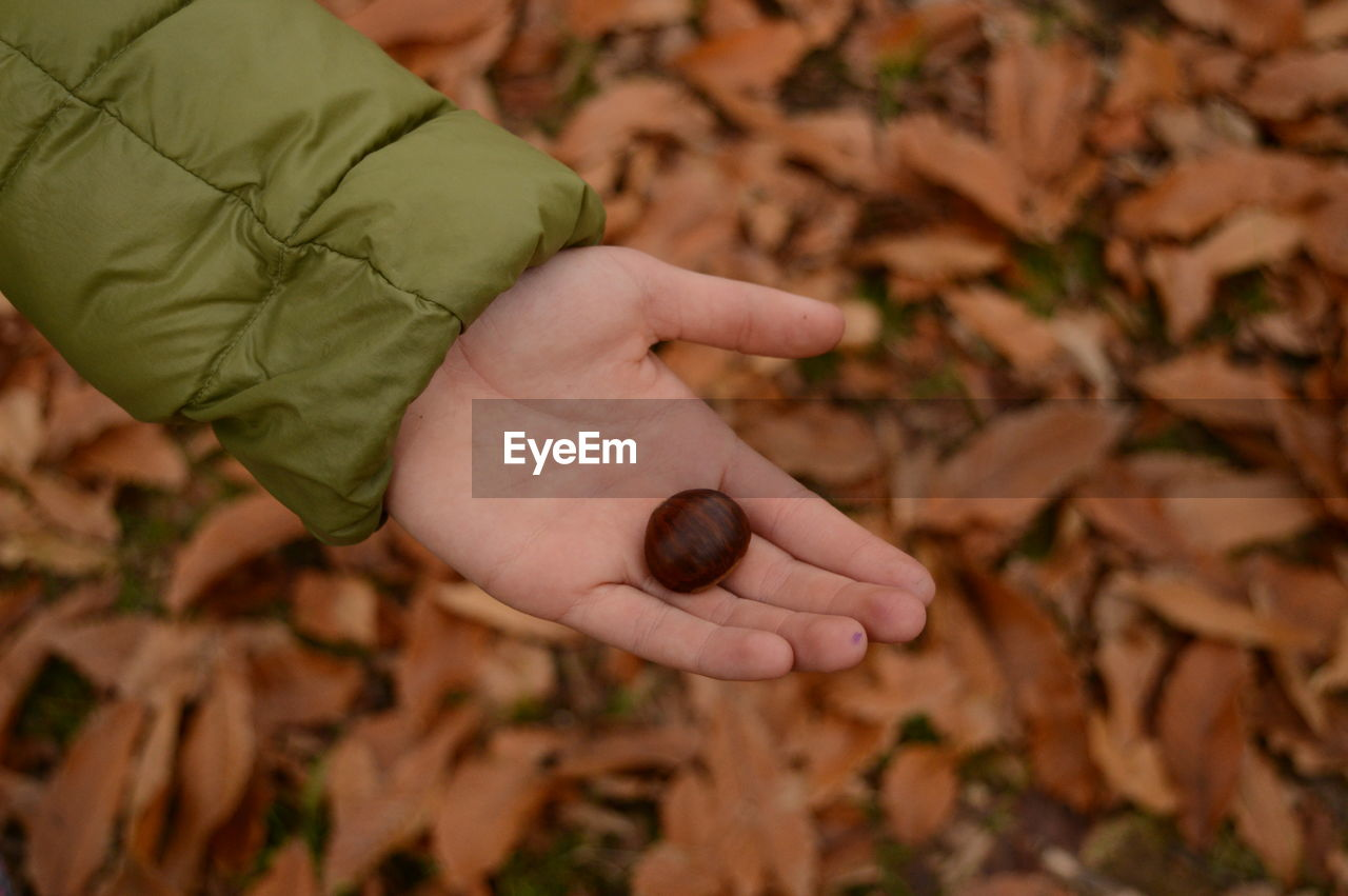Cropped hand holding nut during autumn