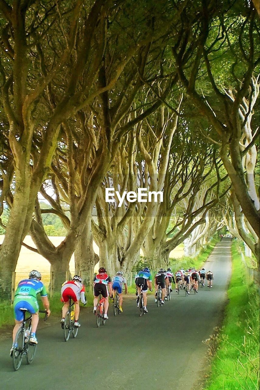 People riding bicycles on street amidst trees