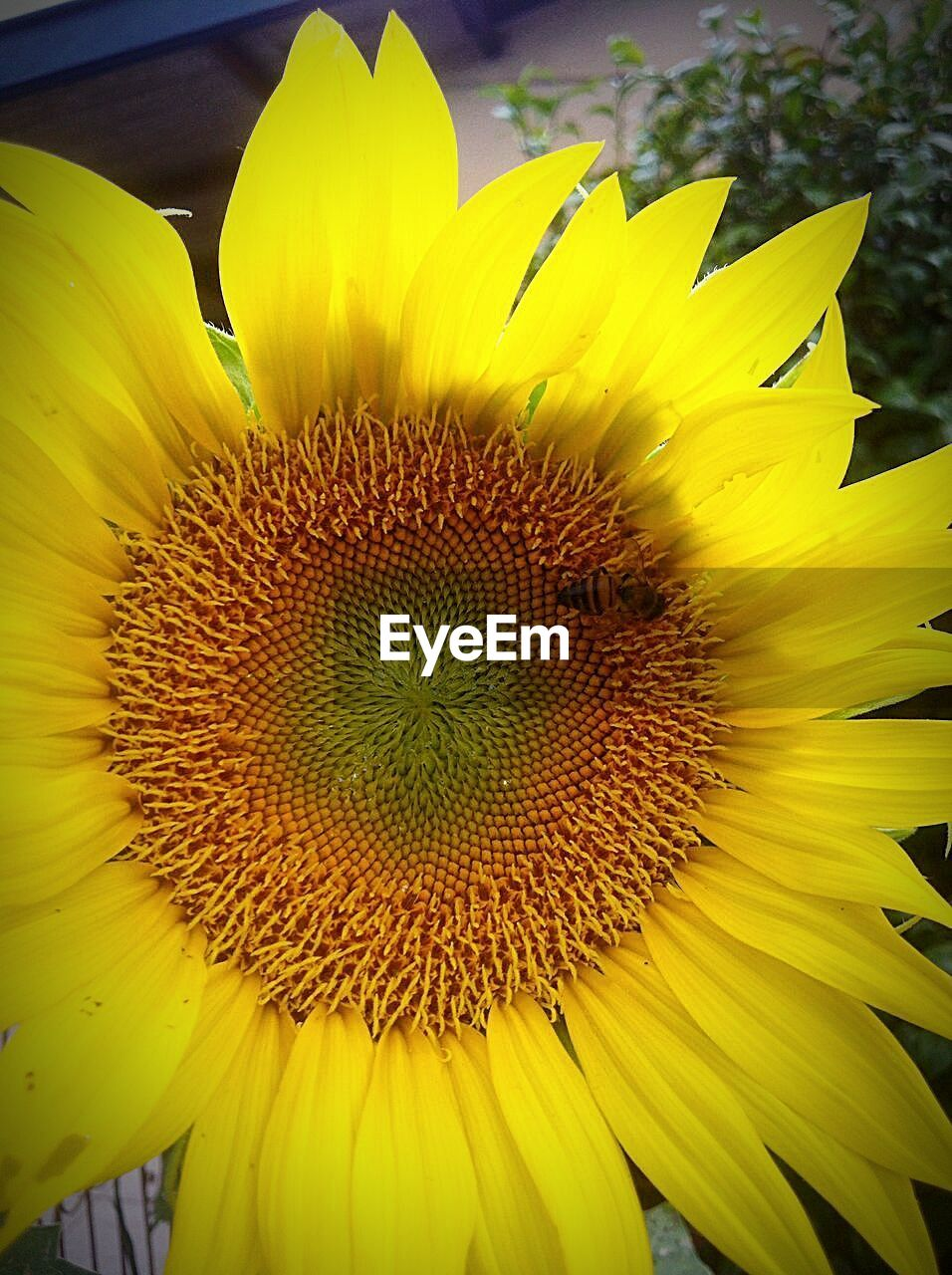 flower, yellow, petal, fragility, flower head, beauty in nature, nature, freshness, growth, plant, outdoors, pollen, no people, sunflower, blooming, day, close-up