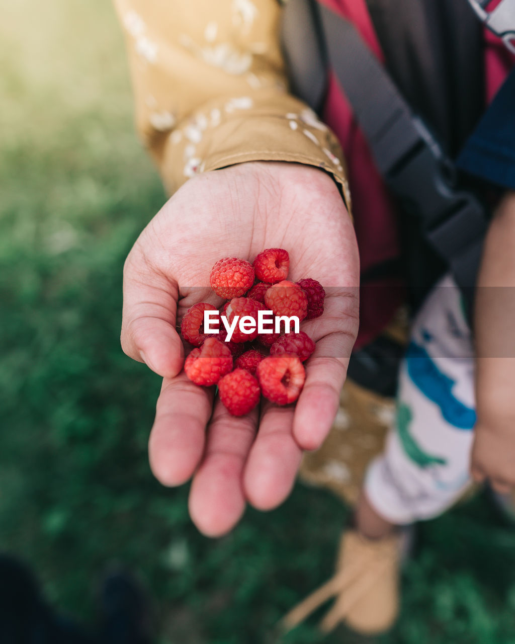 human hand, hand, fruit, berry fruit, healthy eating, real people, holding, food, red, wellbeing, food and drink, freshness, human body part, women, high angle view, people, day, midsection, field, hands cupped, finger