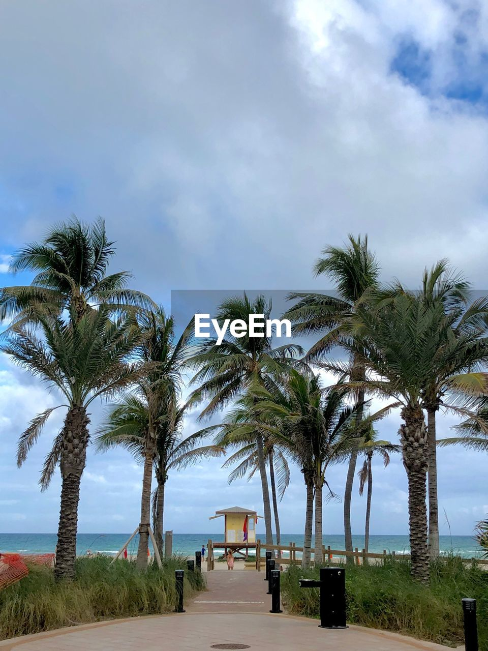 plant, palm tree, tree, tropical climate, sky, cloud - sky, nature, the way forward, growth, direction, day, land, road, outdoors, sea, water, transportation, beach, in a row, treelined, no people, tropical tree