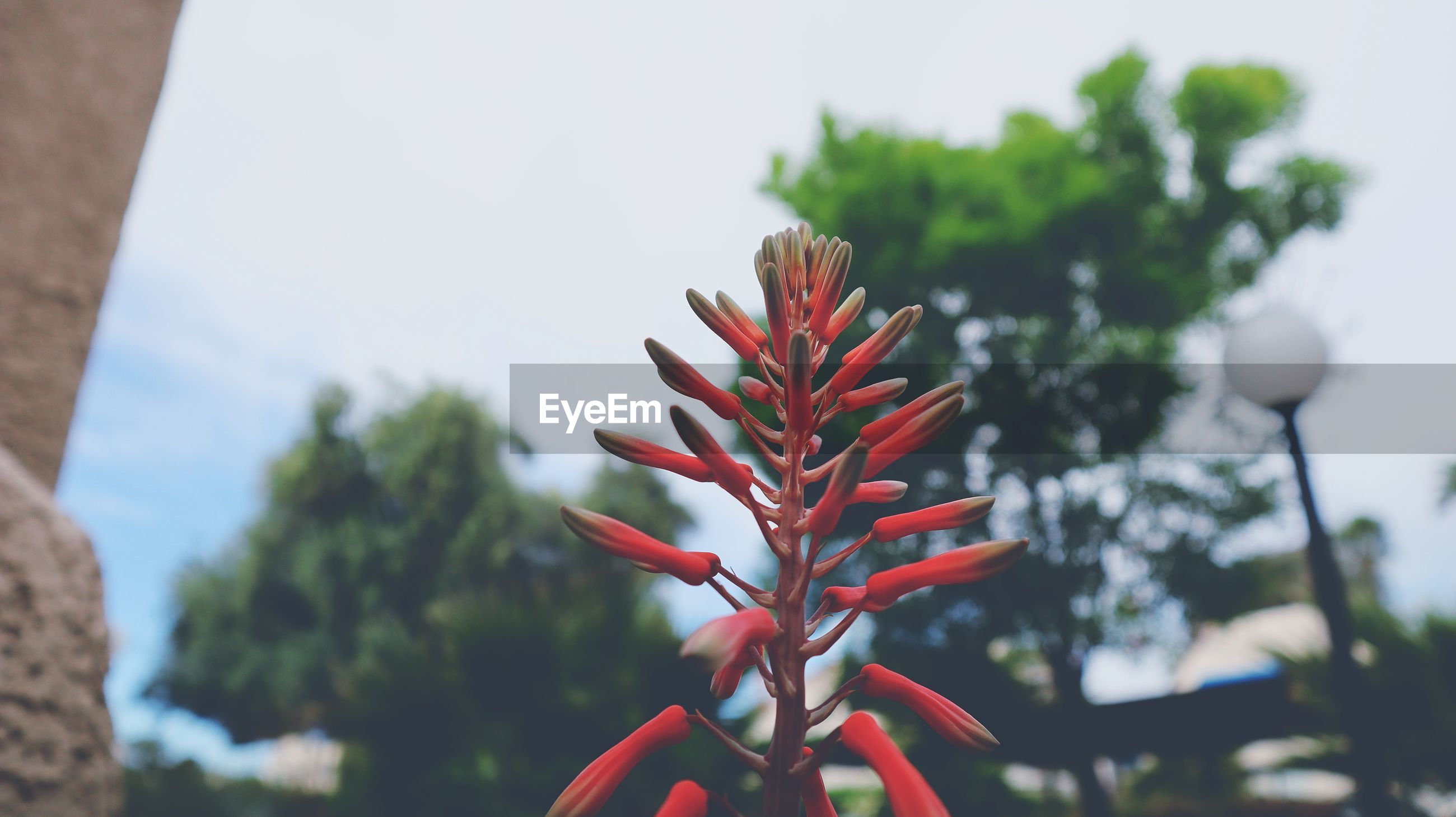 CLOSE-UP OF RED FLOWERING PLANT AGAINST TREE