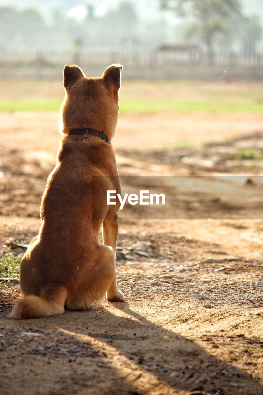VIEW OF DOG SITTING ON LAND