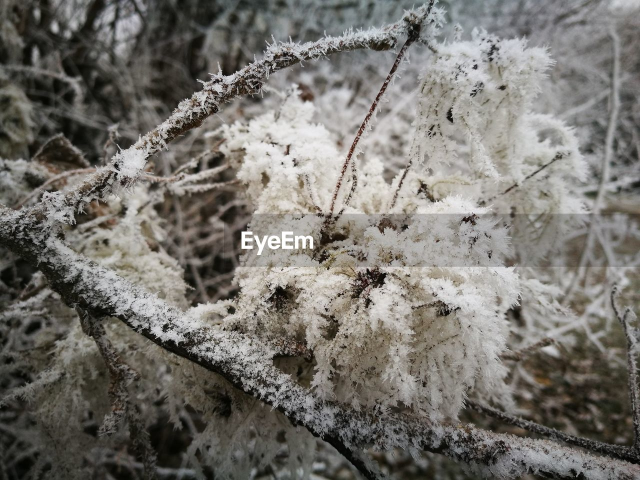 Close-Up Of Snow On Branch