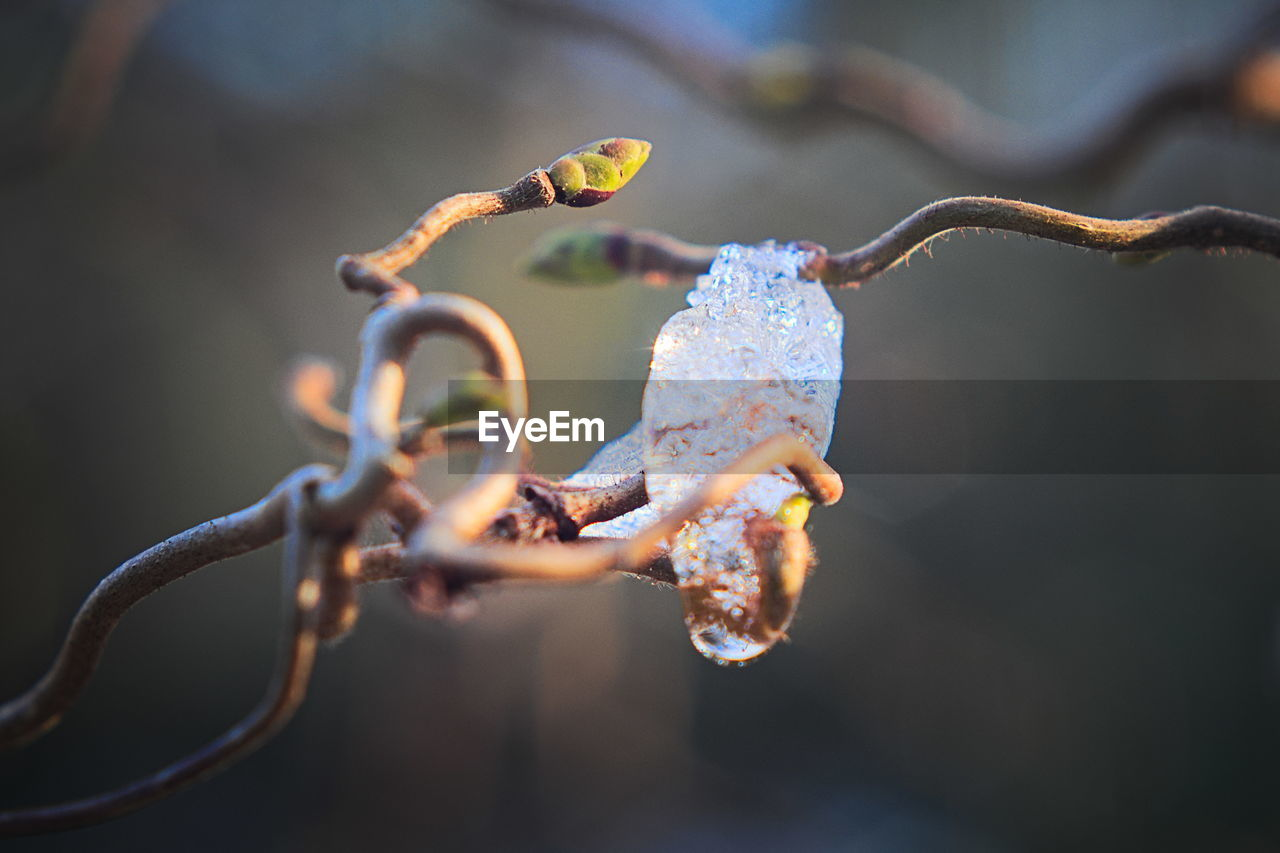 focus on foreground, close-up, nature, no people, day, plant, growth, outdoors, beauty in nature, twig, vulnerability, fragility, selective focus, winter, cold temperature, flower, branch, bud, plant stem