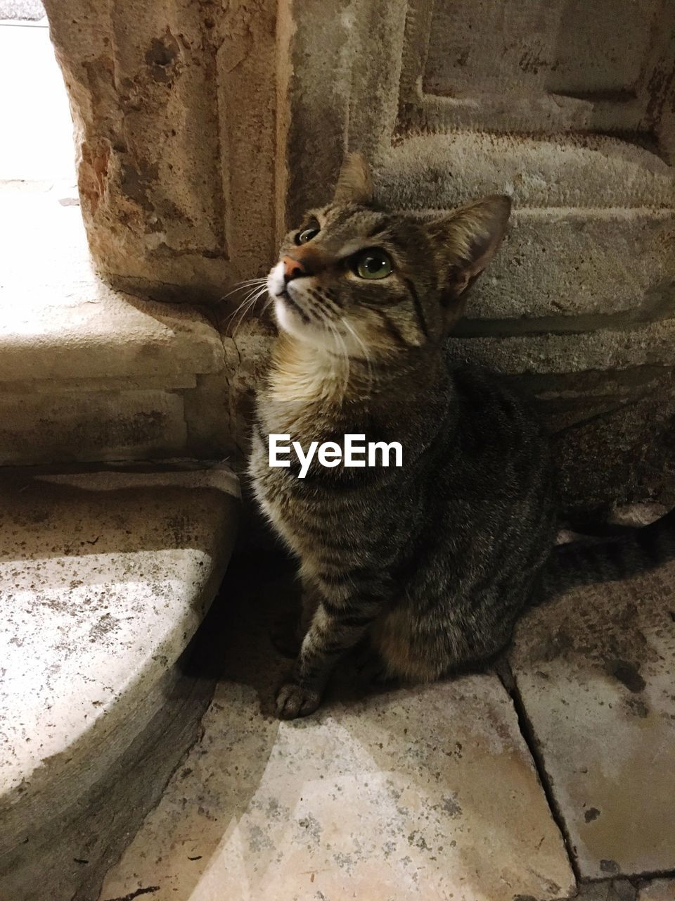 one animal, cat, domestic cat, feline, mammal, domestic, domestic animals, pets, vertebrate, no people, sitting, looking, whisker, staircase, close-up, day, looking away, animal eye
