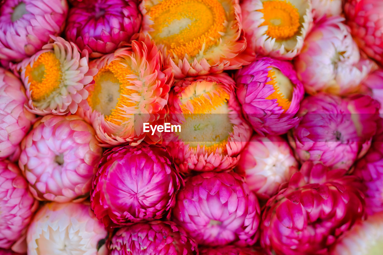freshness, full frame, close-up, flower, pink color, flowering plant, backgrounds, abundance, no people, market, large group of objects, fragility, plant, vulnerability, high angle view, beauty in nature, for sale, retail, food and drink, flower head, flower market, purple