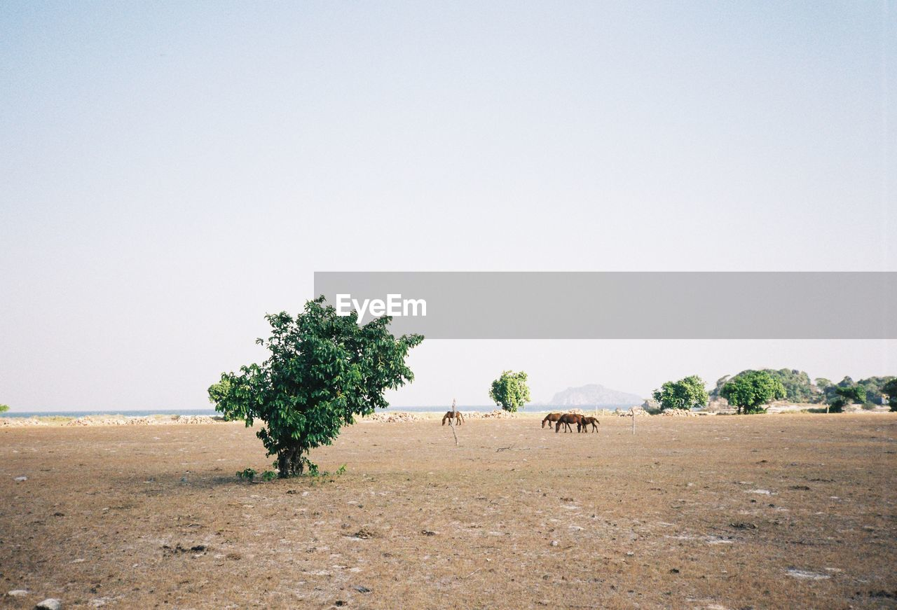plant, tree, animal, sky, mammal, animal themes, environment, landscape, copy space, field, group of animals, nature, land, clear sky, animal wildlife, vertebrate, domestic animals, beauty in nature, scenics - nature, day, no people, outdoors, herbivorous