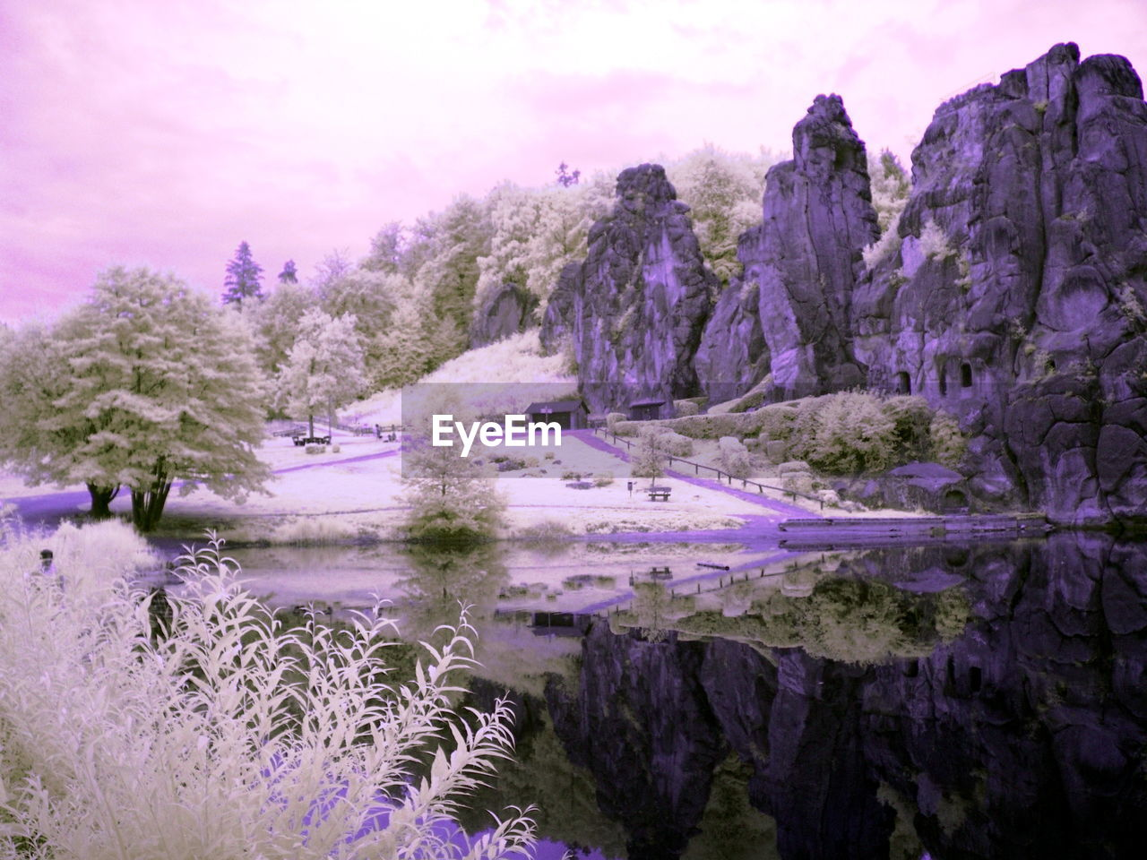 plant, beauty in nature, tree, water, nature, sky, purple, no people, tranquility, flower, scenics - nature, growth, flowering plant, tranquil scene, cloud - sky, lake, land, day, outdoors