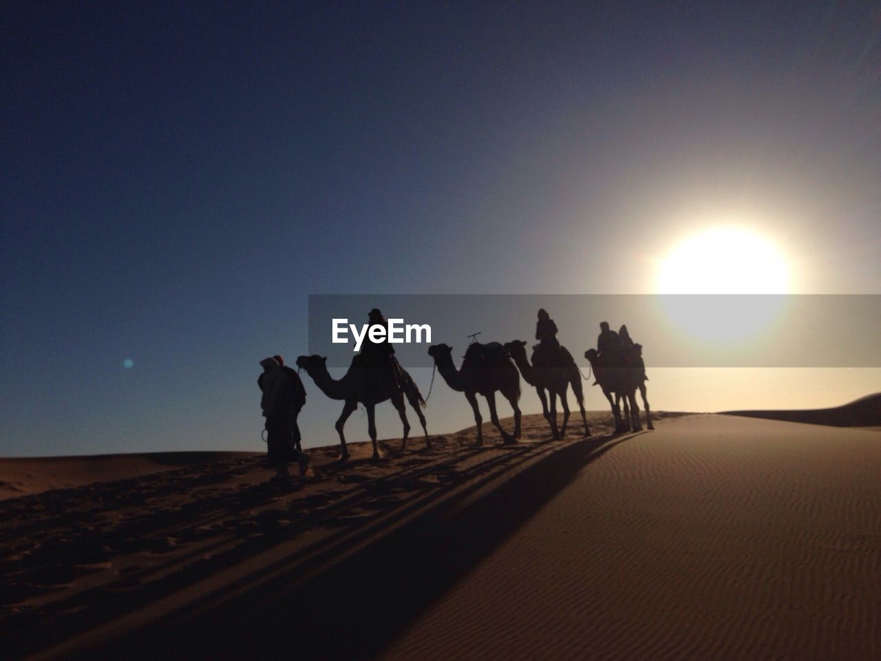 People with camel on desert against sky during sunrise
