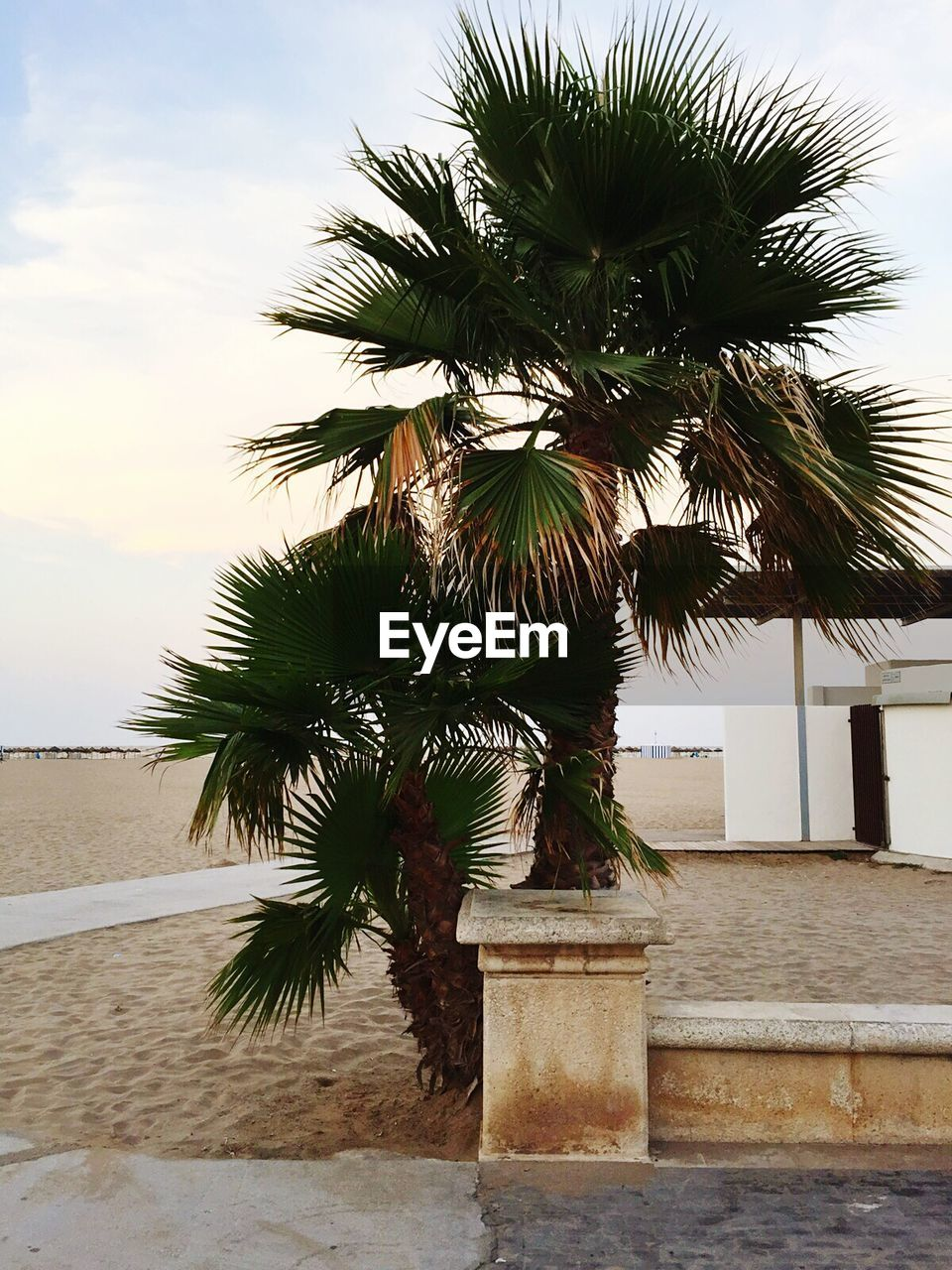 Palm Trees Growing On Beach Against Sky