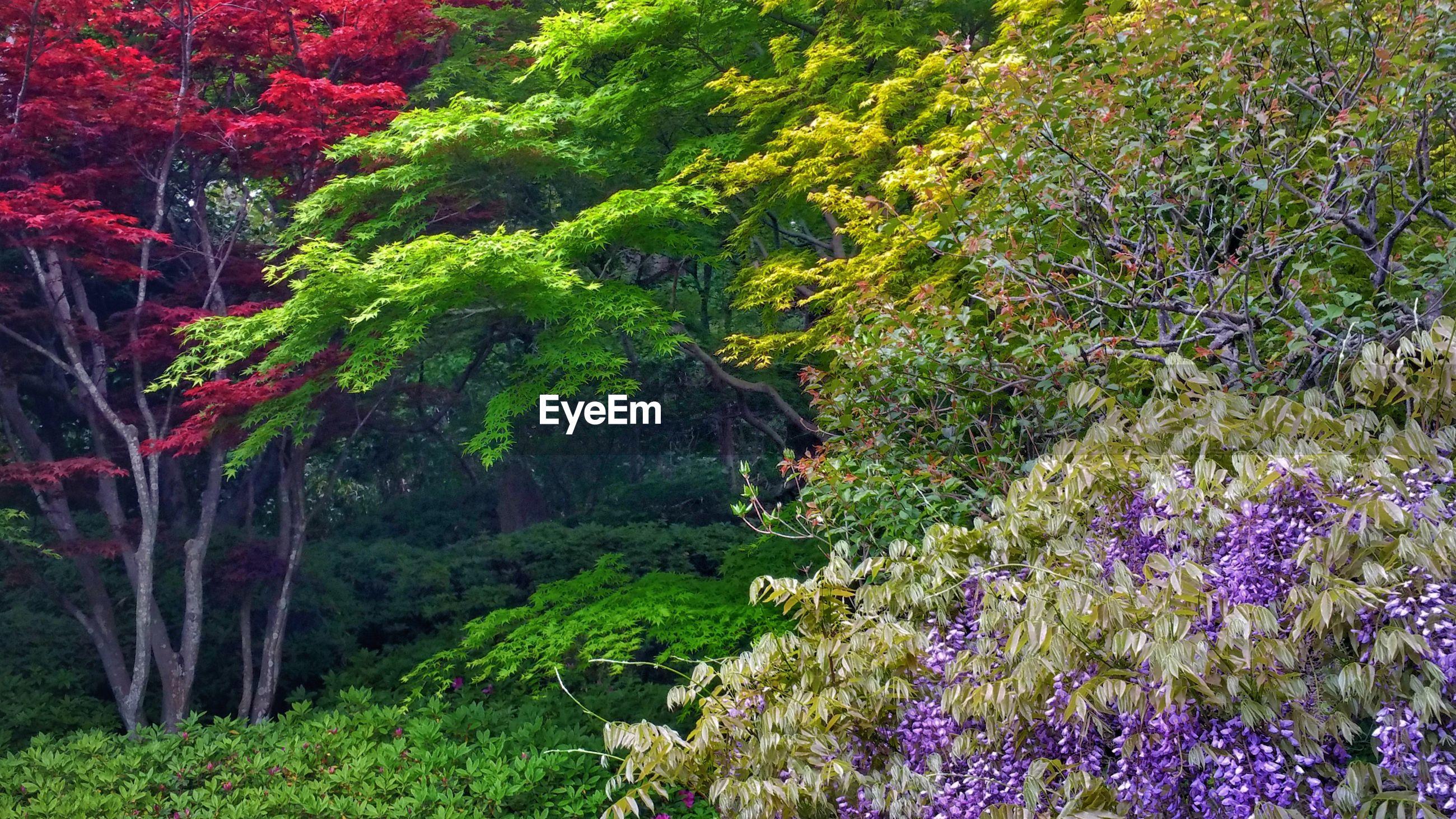 PURPLE FLOWERING PLANTS ON LAND