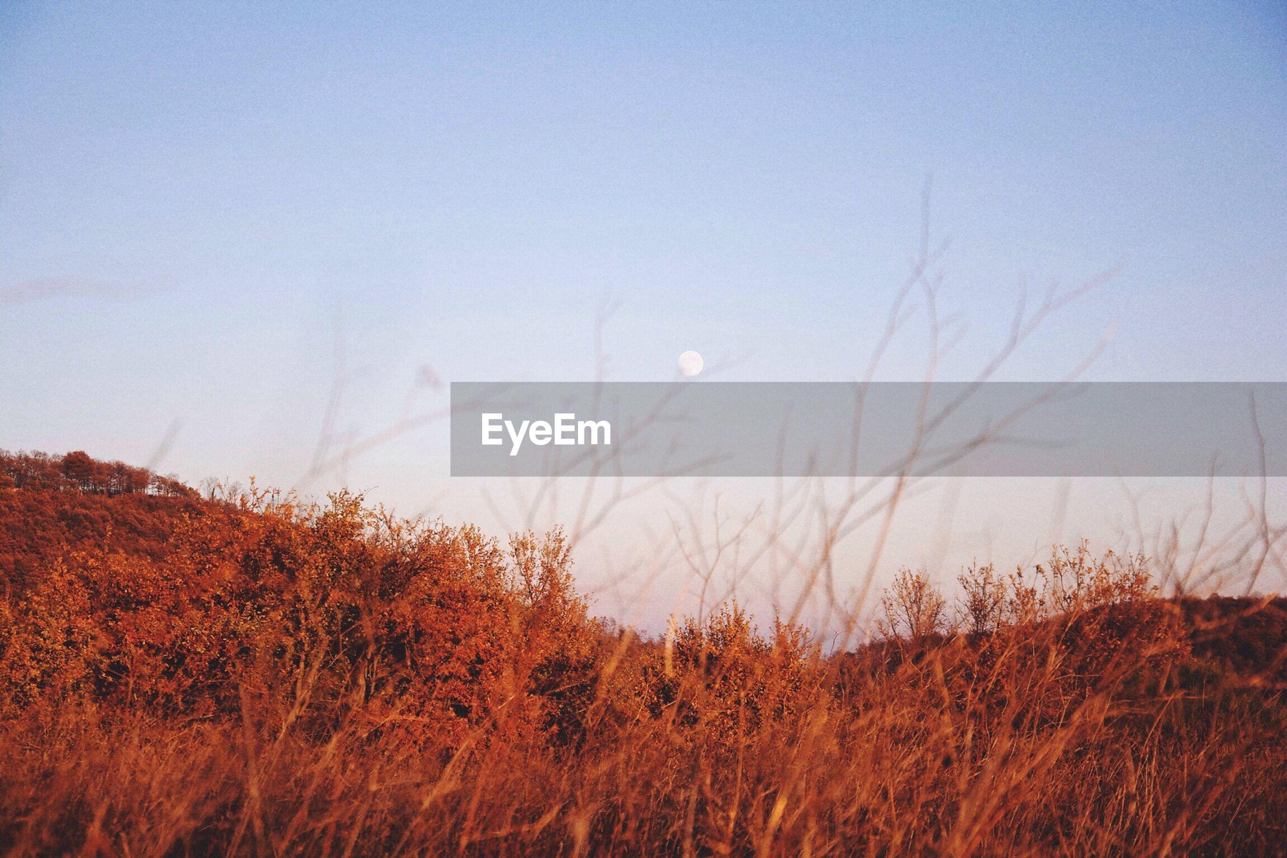 Idyllic shot of moon in sky over landscape