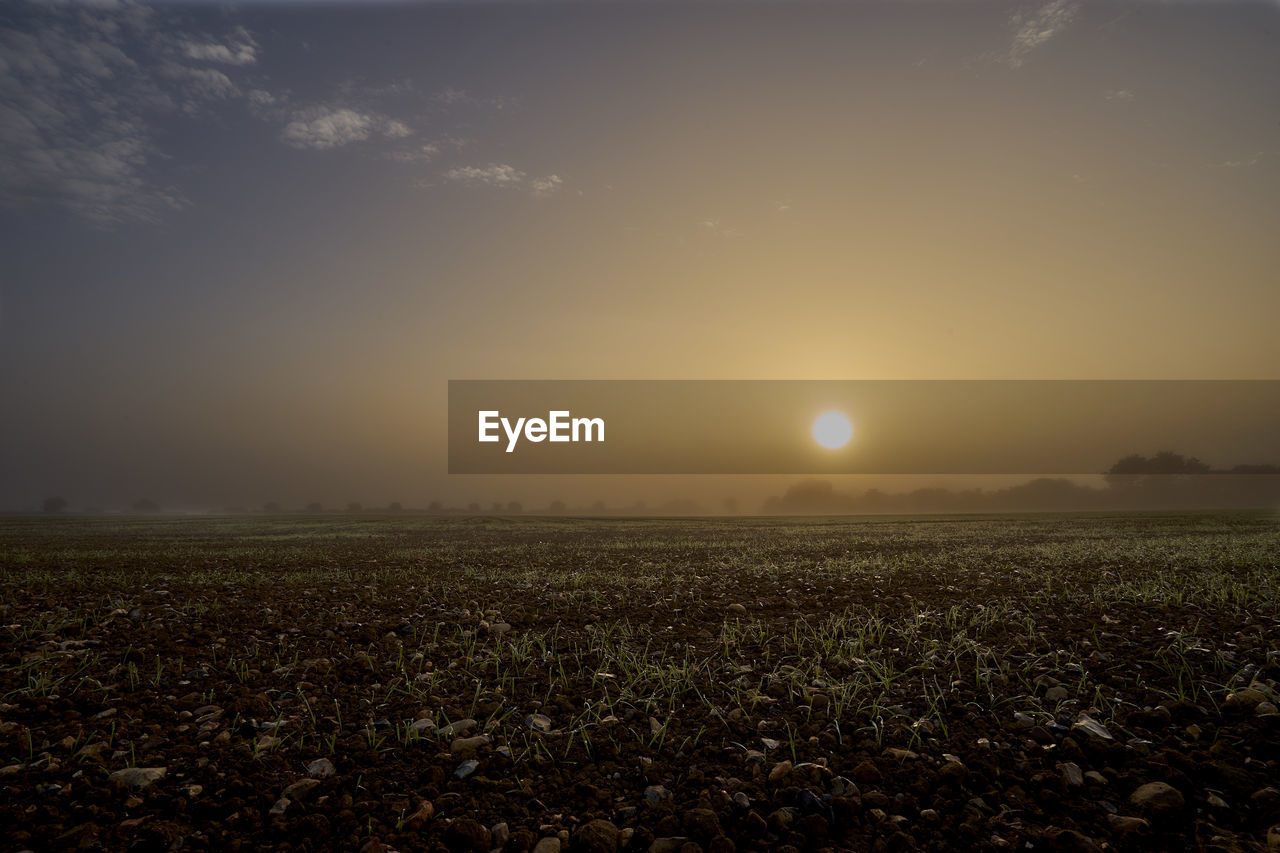 field, sun, nature, growth, tranquility, beauty in nature, landscape, sunset, agriculture, scenics, no people, outdoors, plant, sky, day