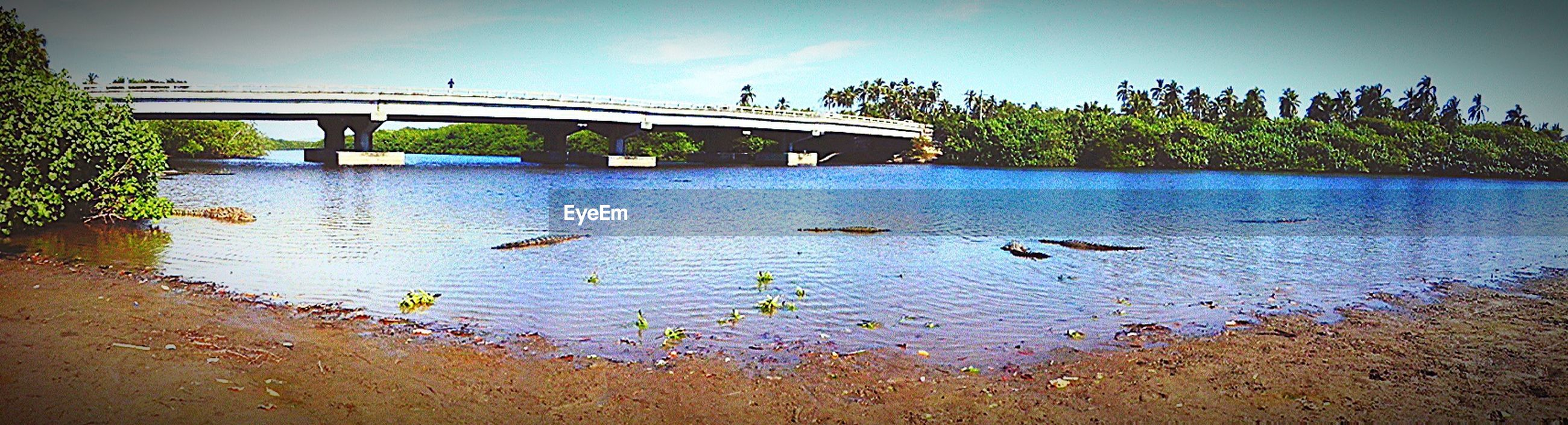 water, bird, animal themes, animals in the wild, wildlife, tree, built structure, river, bridge - man made structure, reflection, sky, architecture, connection, nature, lake, blue, one animal, plant, tranquility, duck