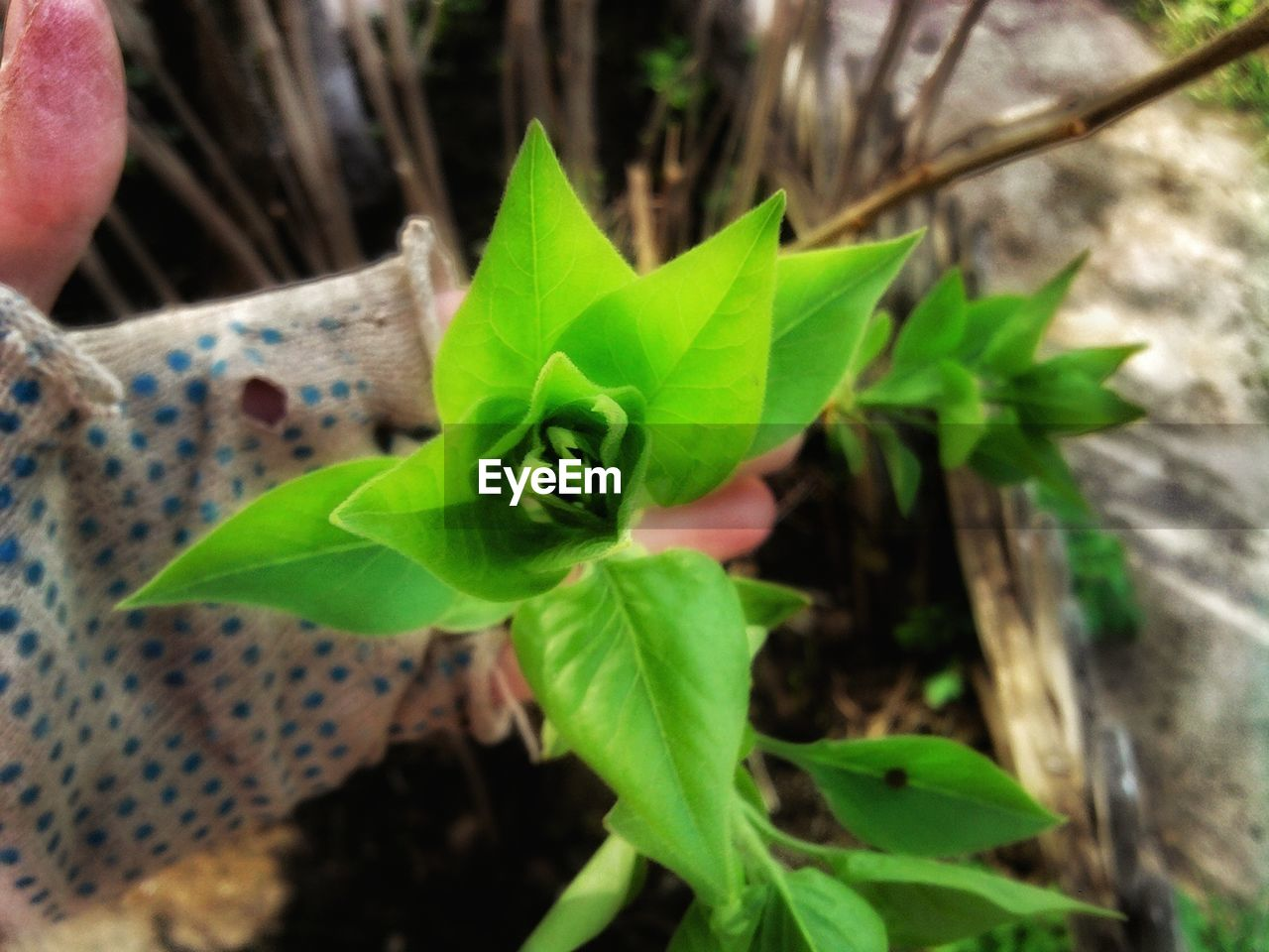 leaf, growth, plant, green color, nature, fragility, close-up, outdoors, no people, day, beauty in nature, freshness