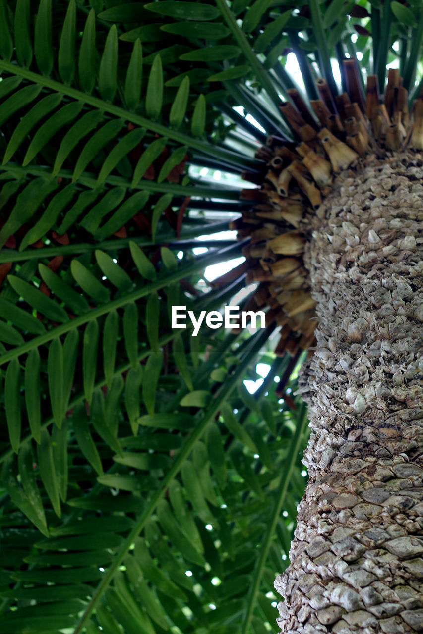green color, growth, plant, palm tree, tree, no people, pattern, tropical climate, day, nature, close-up, leaf, low angle view, tree trunk, beauty in nature, focus on foreground, trunk, natural pattern, plant part, textured, outdoors, palm leaf