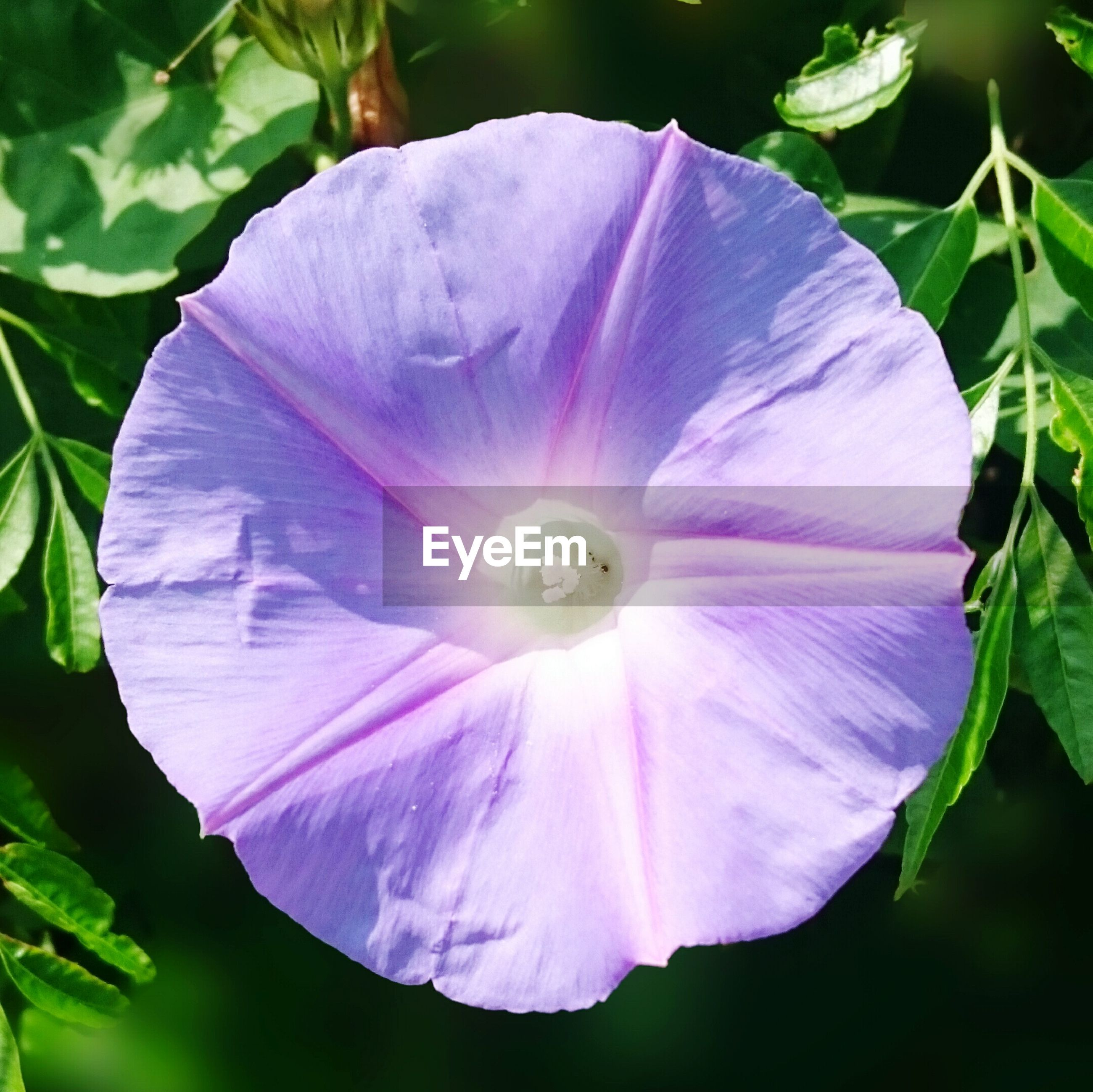 flower, petal, freshness, fragility, flower head, single flower, growth, beauty in nature, purple, close-up, nature, leaf, blooming, plant, focus on foreground, stamen, outdoors, day, in bloom, no people