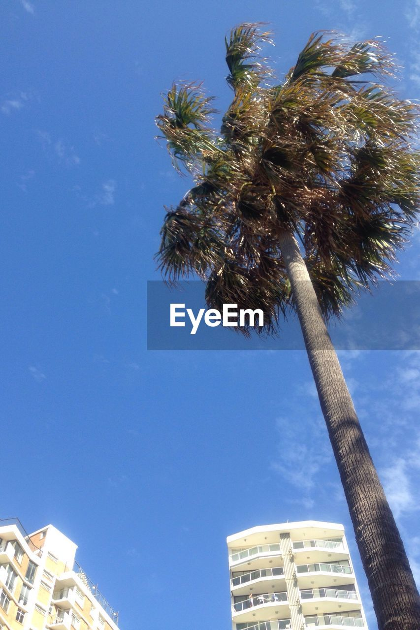 low angle view, palm tree, tree, day, growth, no people, architecture, blue, nature, built structure, outdoors, sky, building exterior, beauty in nature