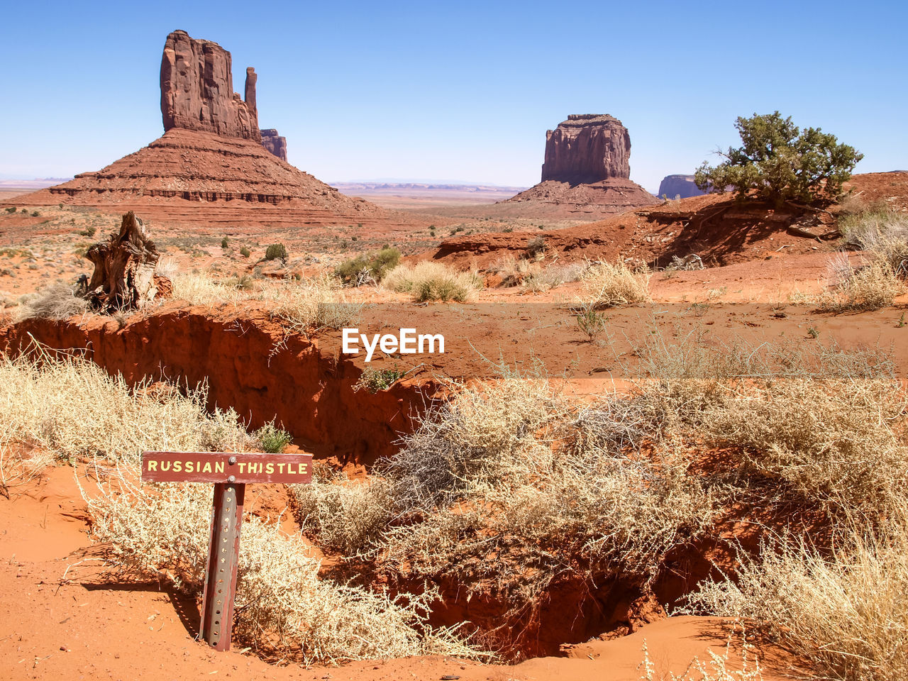 rock formation, geology, rock - object, nature, tranquility, arid climate, tranquil scene, landscape, beauty in nature, physical geography, scenics, day, desert, outdoors, no people, travel destinations, sunlight, plant, clear sky, tree, sky