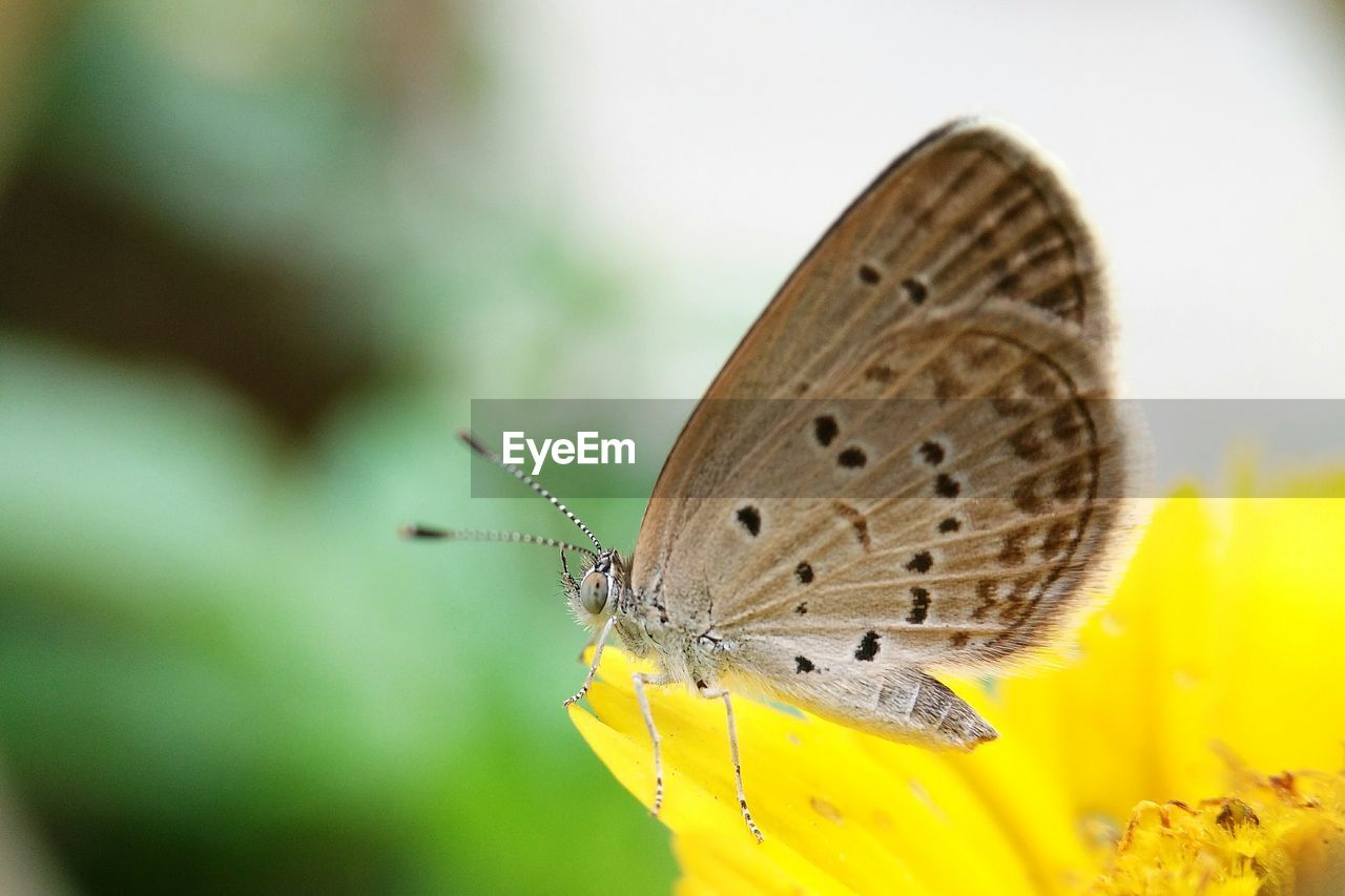 insect, animals in the wild, animal themes, butterfly - insect, one animal, yellow, butterfly, fragility, close-up, nature, no people, flower, day, outdoors, plant, animal wildlife, beauty in nature, spread wings, perching, freshness