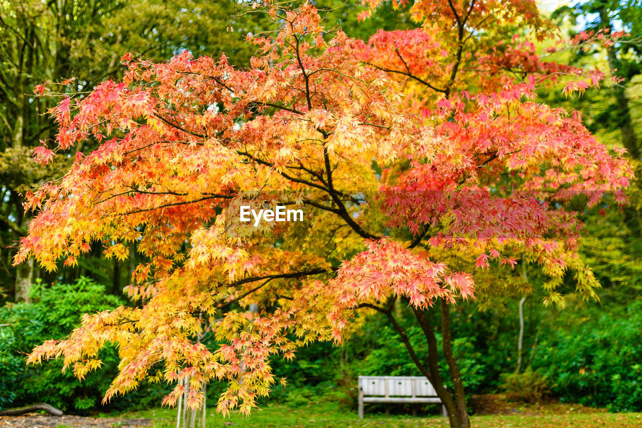 plant, tree, autumn, change, beauty in nature, nature, no people, orange color, day, growth, leaf, flower, park, outdoors, park - man made space, plant part, branch, flowering plant, red, tranquility