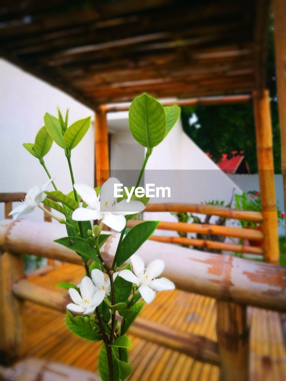 flower, freshness, leaf, plant, table, nature, indoors, growth, beauty in nature, no people, wood - material, fragility, petal, close-up, day, flower head, frangipani, tree