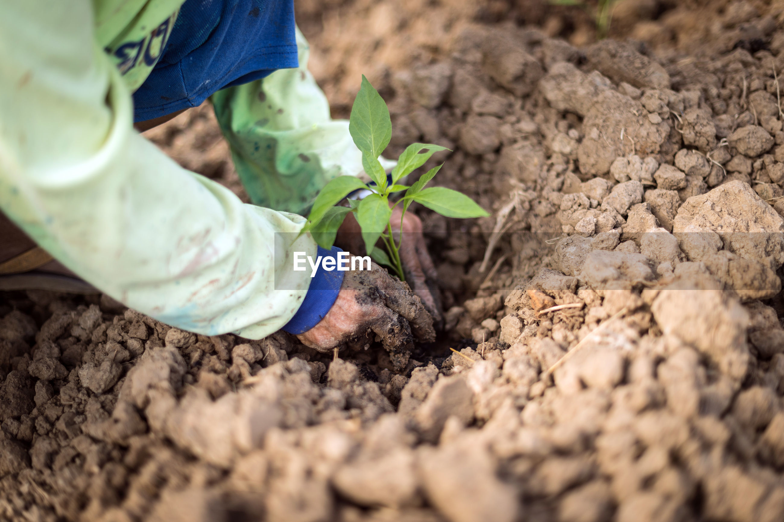 Midsection of person planting on field